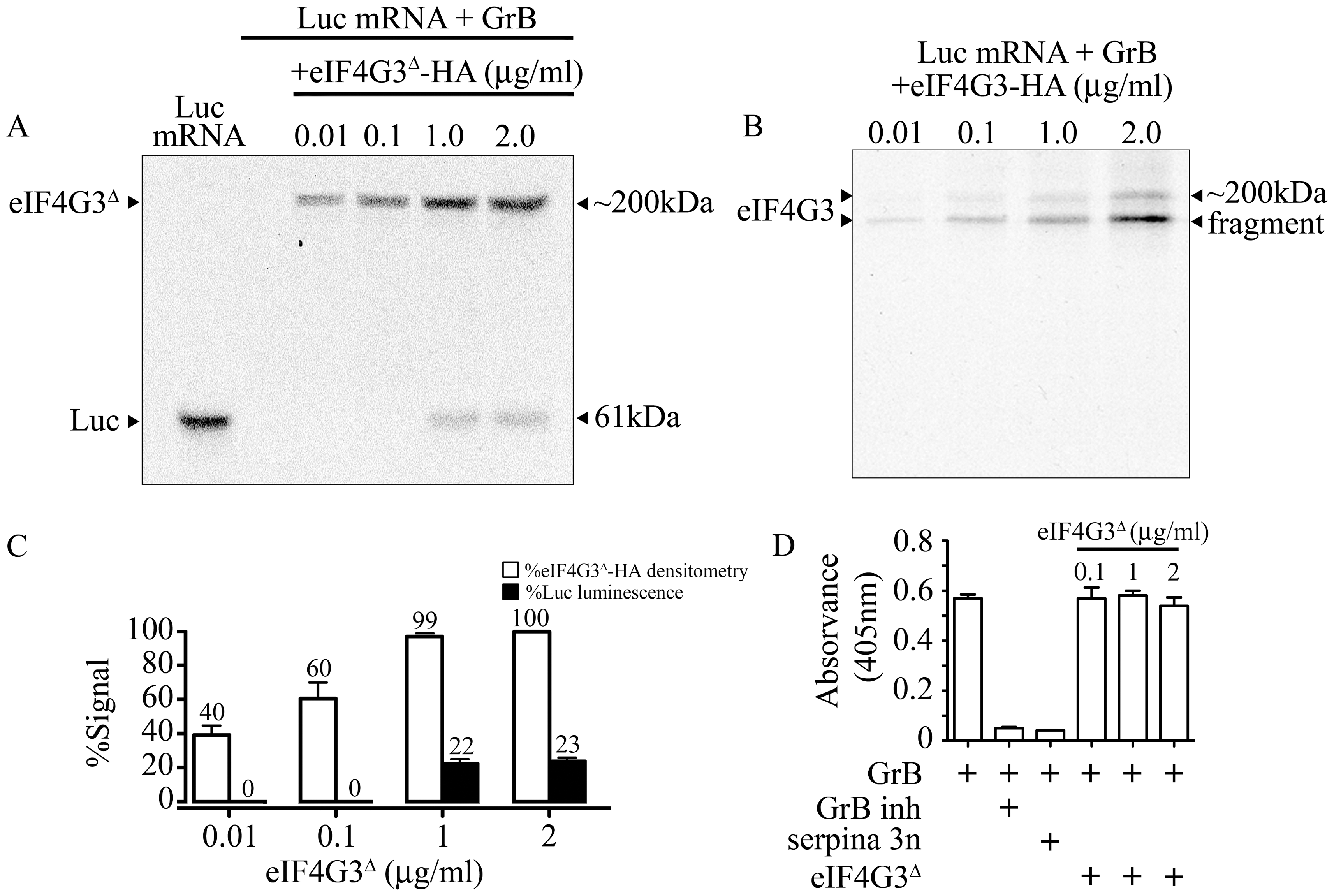 GrB resistant eIF4G3<sup>Δ</sup> can restore <i>in vitro</i> translation of Luc.