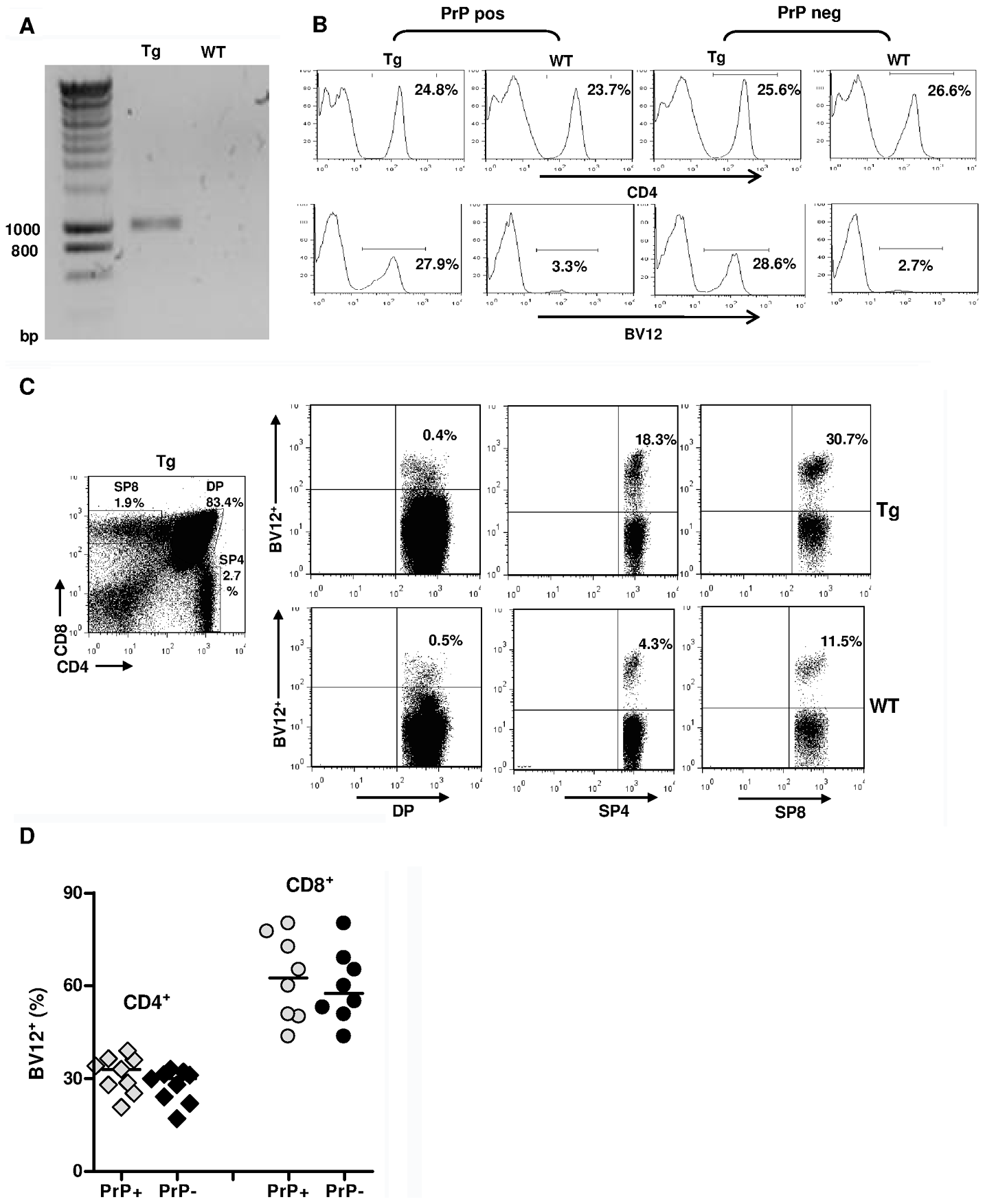 Expression of the TCR β-chain transgene in PrP+ and PrP– mice.