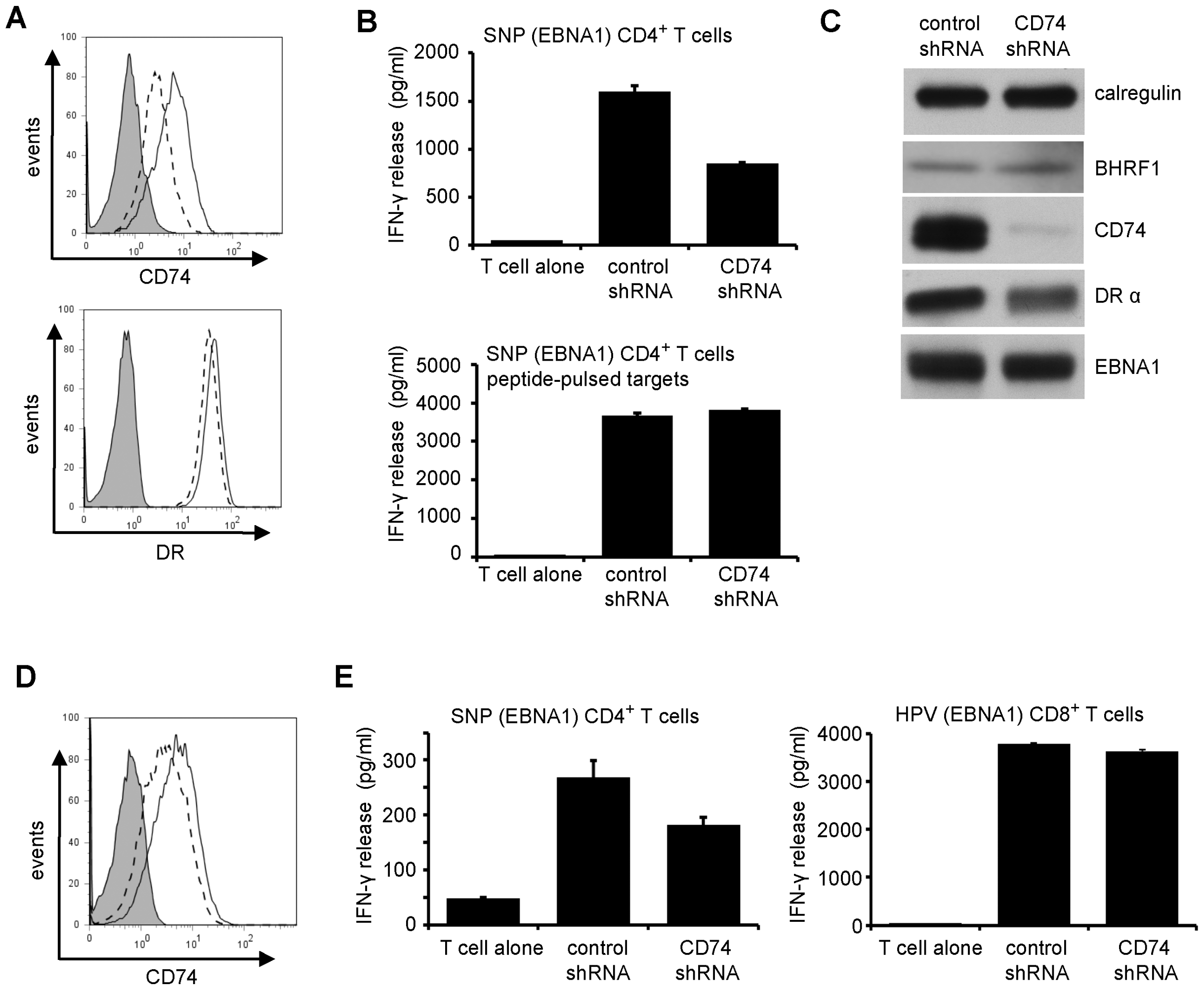 Downregulation of CD74 is sufficient to impair CD4<sup>+</sup> T cell recognition.