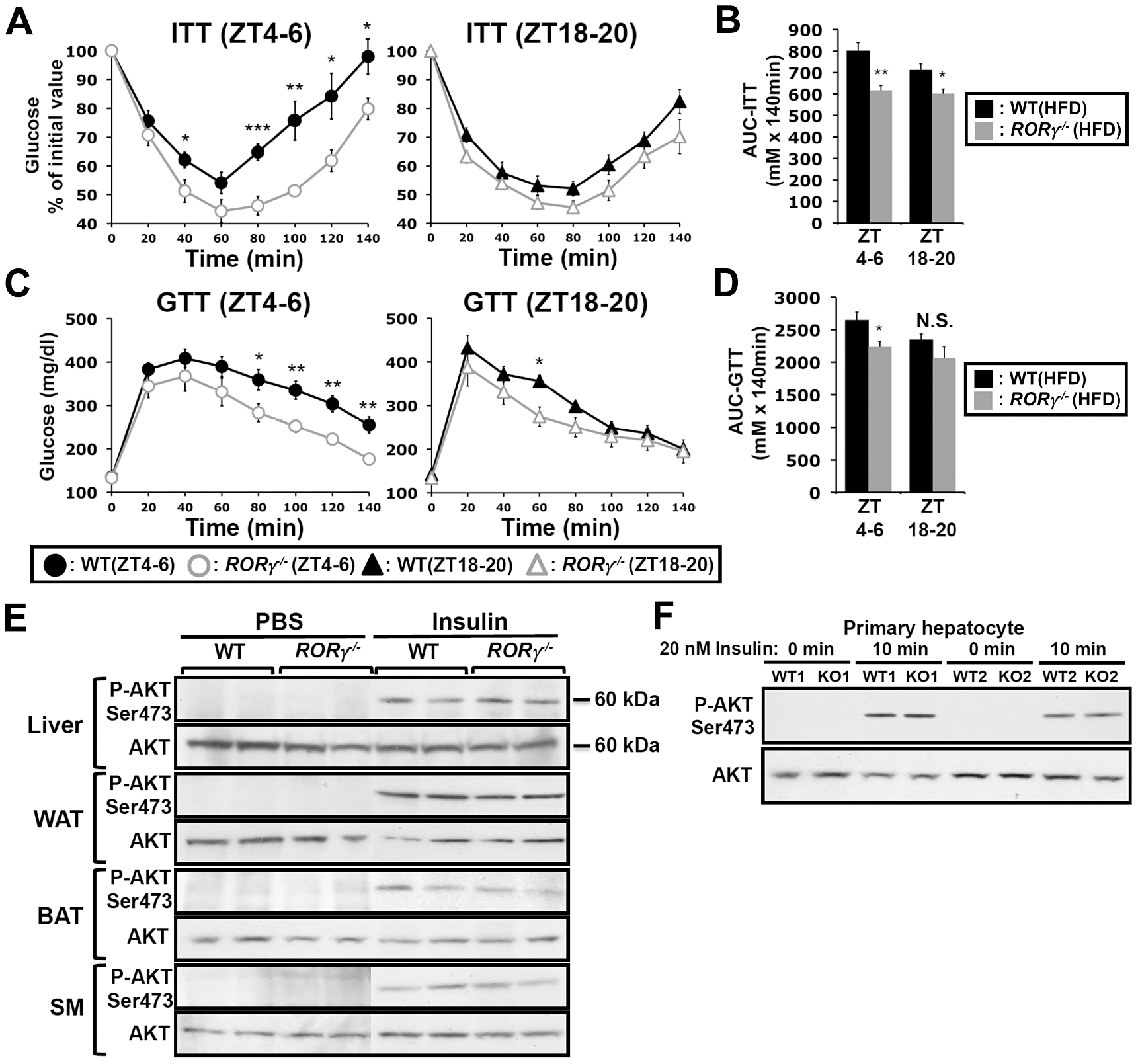 Loss of RORγ improves insulin and glucose tolerance in a ZT-dependent manner.