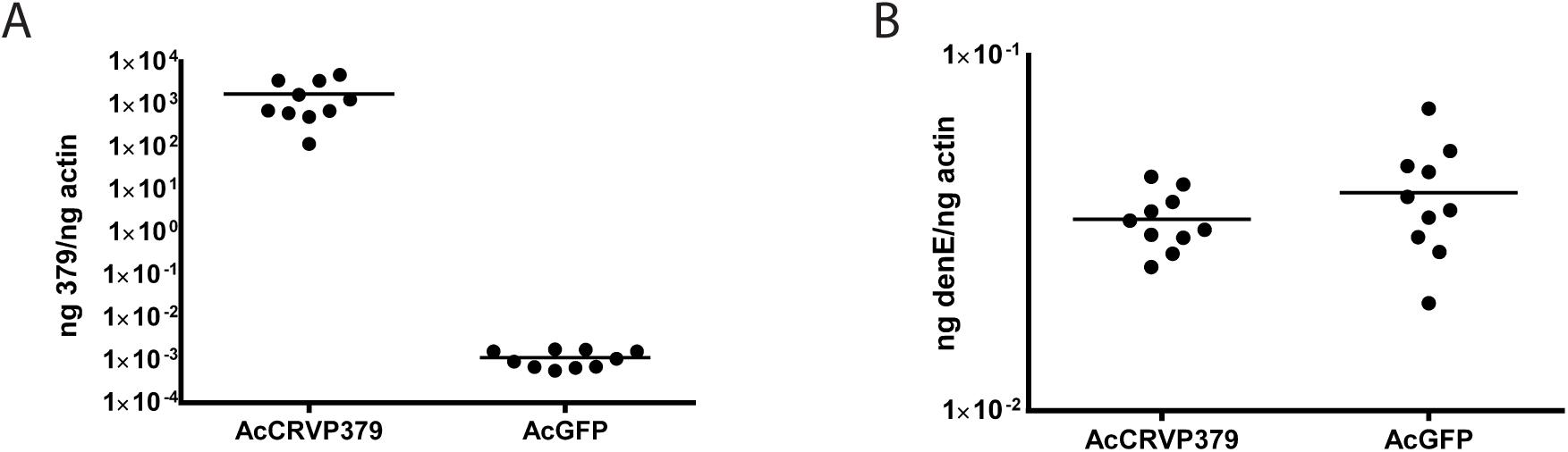 DENV infection optimally enhances CRVP379 expression.