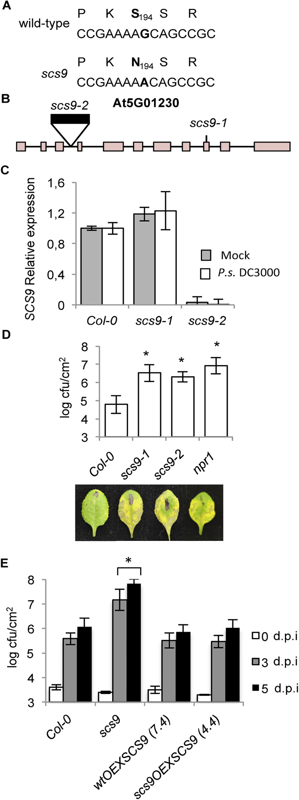 <i>scs9</i> is a mutant allele of At5g01230.