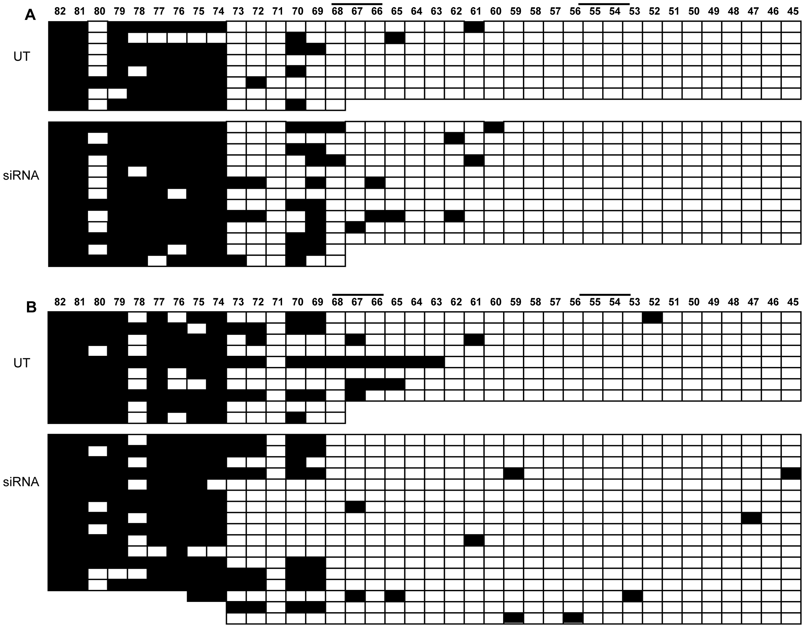 Methylation analysis of <i>FMR1</i> locus after <i>CTCF</i> knock-down.