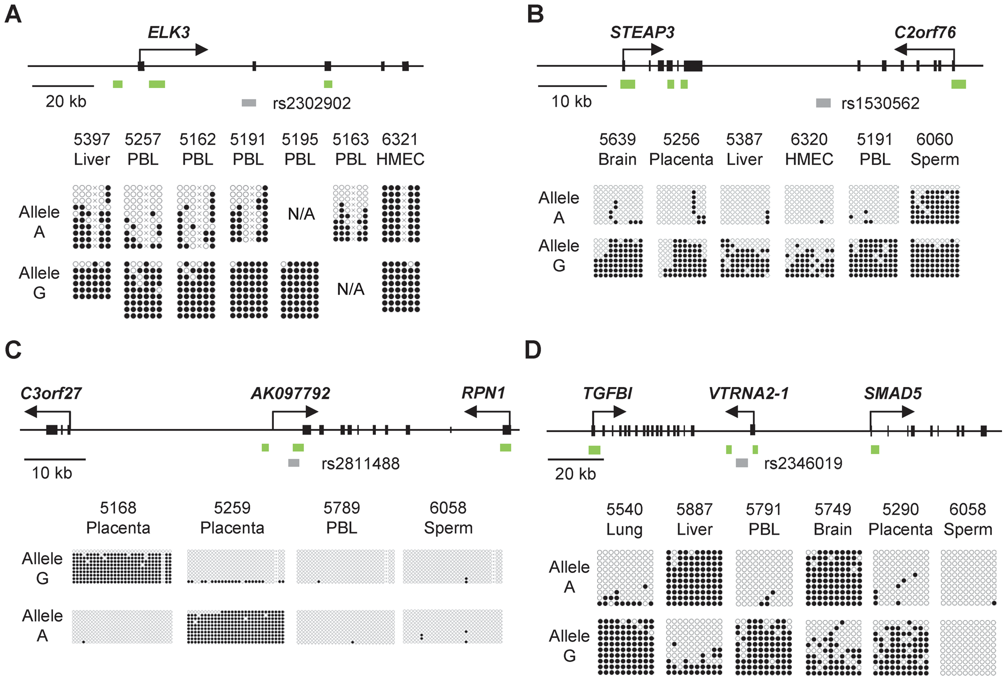 Bis-seq showing strong ASM in the <i>ELK3</i>, <i>STEAP3-C2orf76</i>, <i>C3orf27-RPN1</i>, and <i>VTRNA2-1</i> index regions.