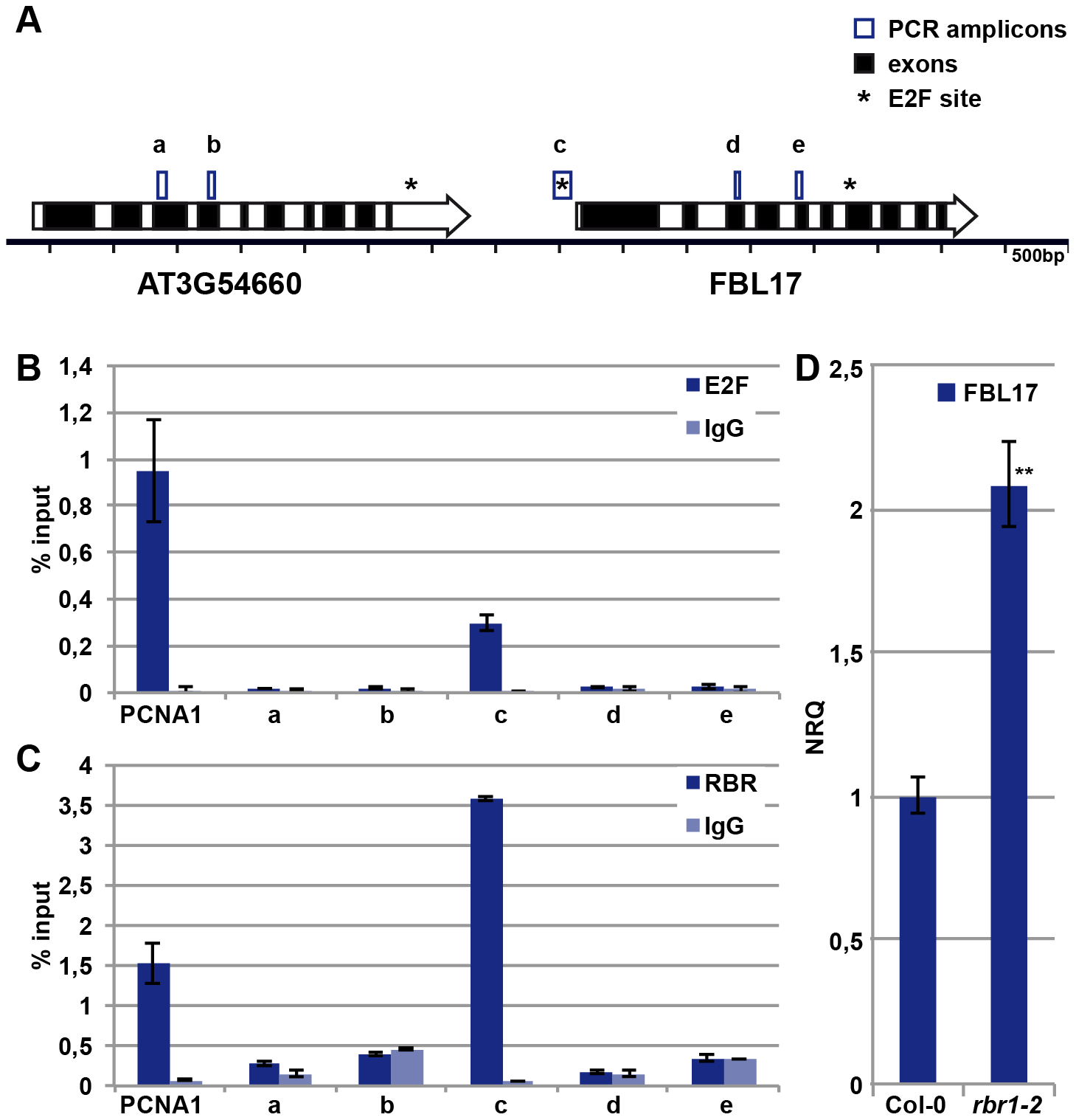 E2FA and RBR control the expression of <i>FBL17</i>.