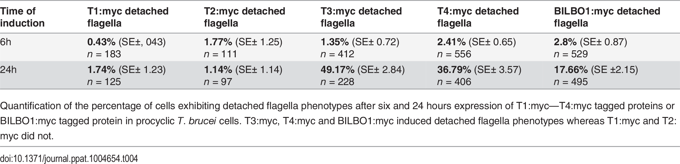 T1:myc—T4:myc and BILBO1:myc detached flagellum phenotypes after expression <i>T. brucei</i> cells.