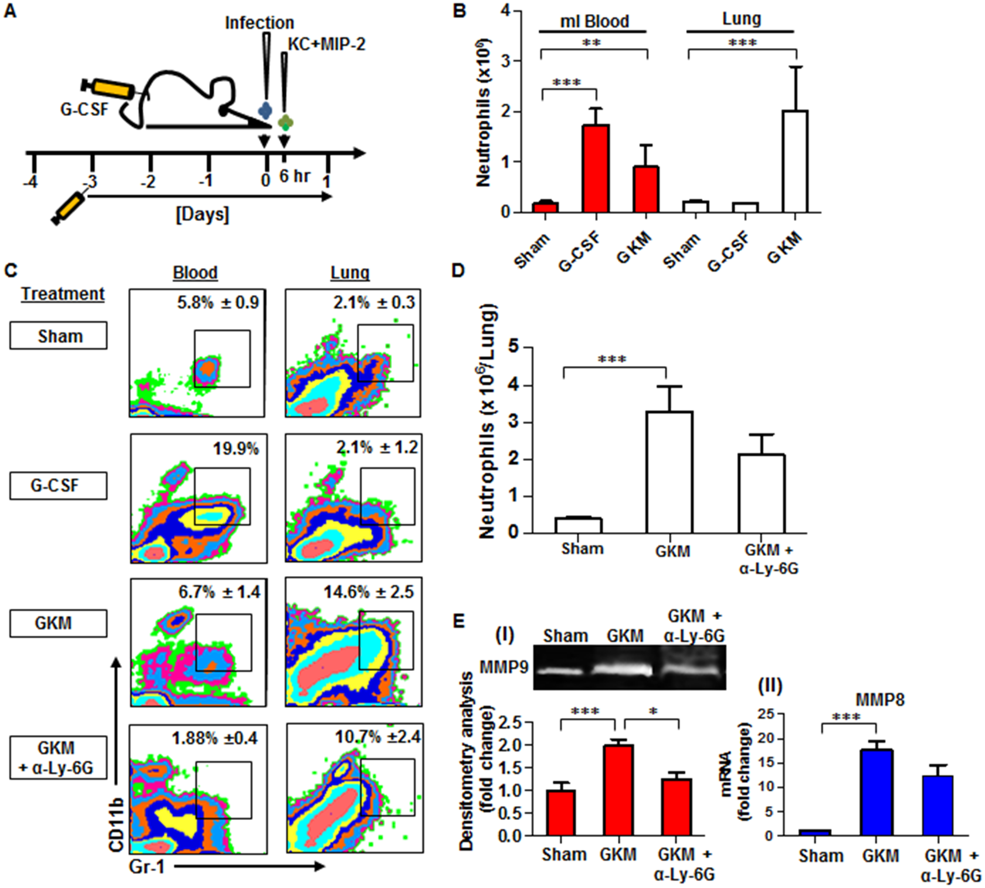 Combined treatment with G-CSF, KC and MIP-2 (GKM) facilitates the early recruitment of neutrophils to the lungs during pneumonic plague.