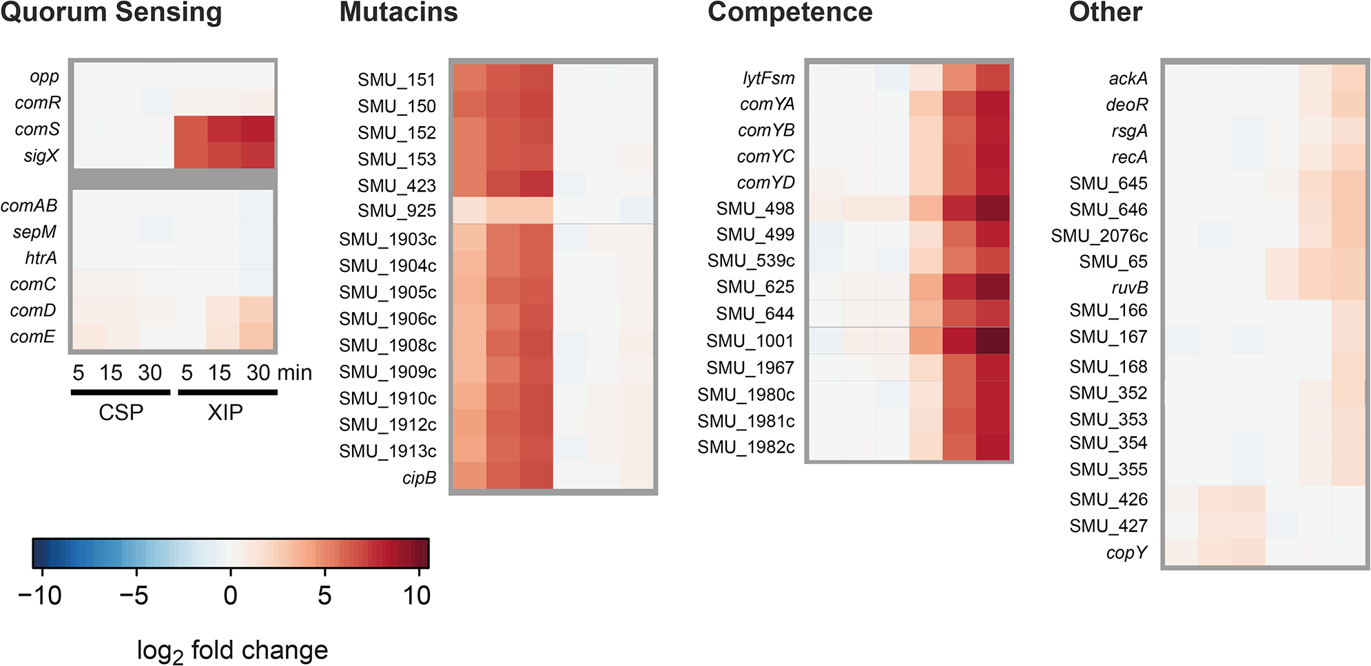Time resolved transcriptome analysis of XIP and CSP induced <i>S. mutans</i> WT cultures in CDM.