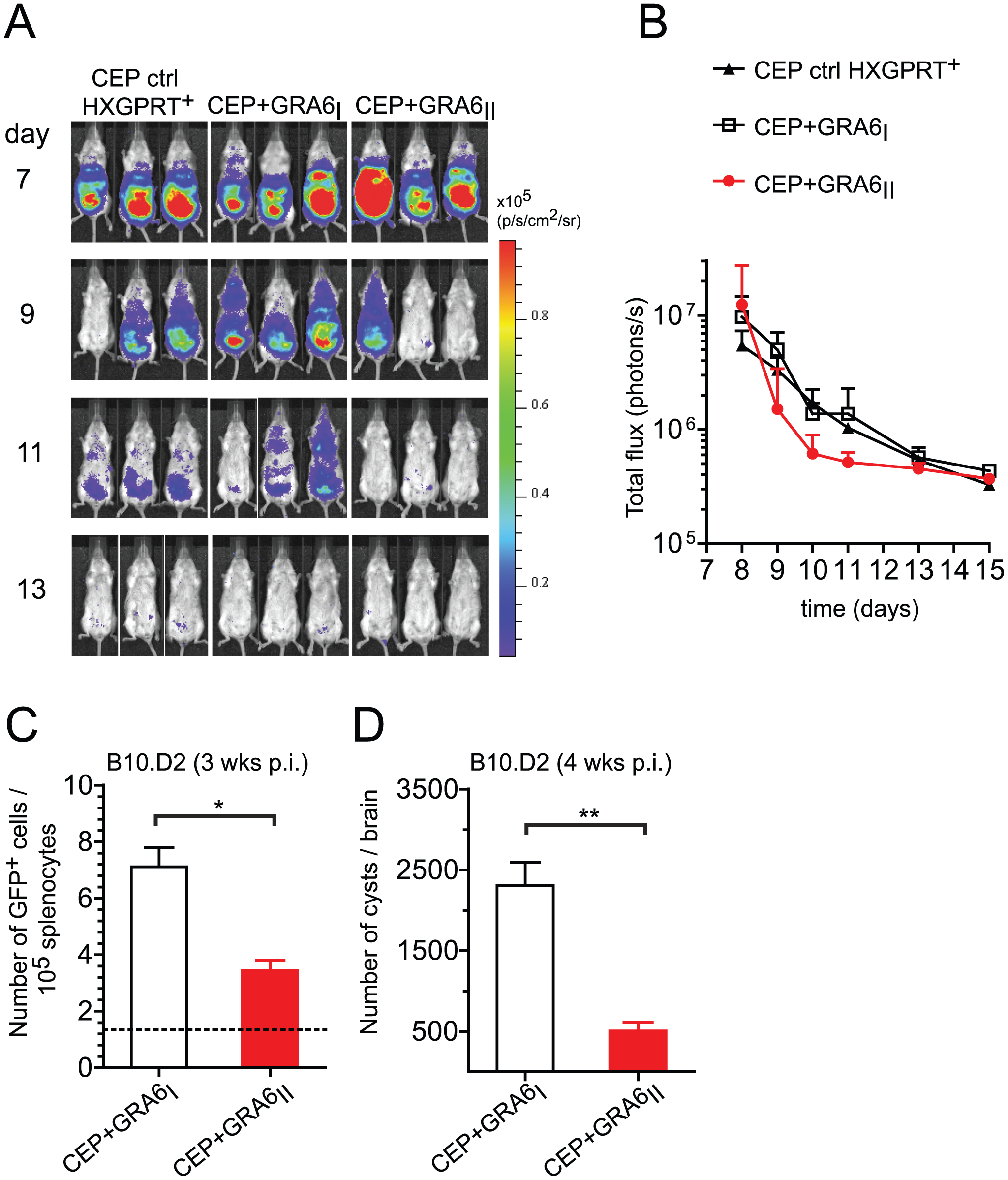 Presence of the GRA6<sub>II</sub>-derived HF10 peptide correlates with better parasite control during acute and chronic <i>T. gondii</i> infection.