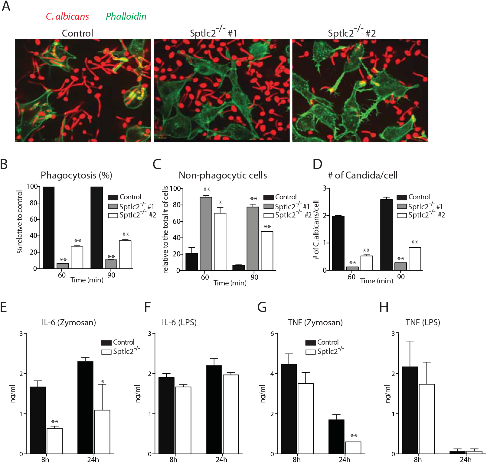 Sptlc2<sup>-/-</sup> DC2.4 cells are defective in phagocytosis of <i>C</i>. <i>albicans</i> and produce reduced level of pro-inflammatory cytokines.