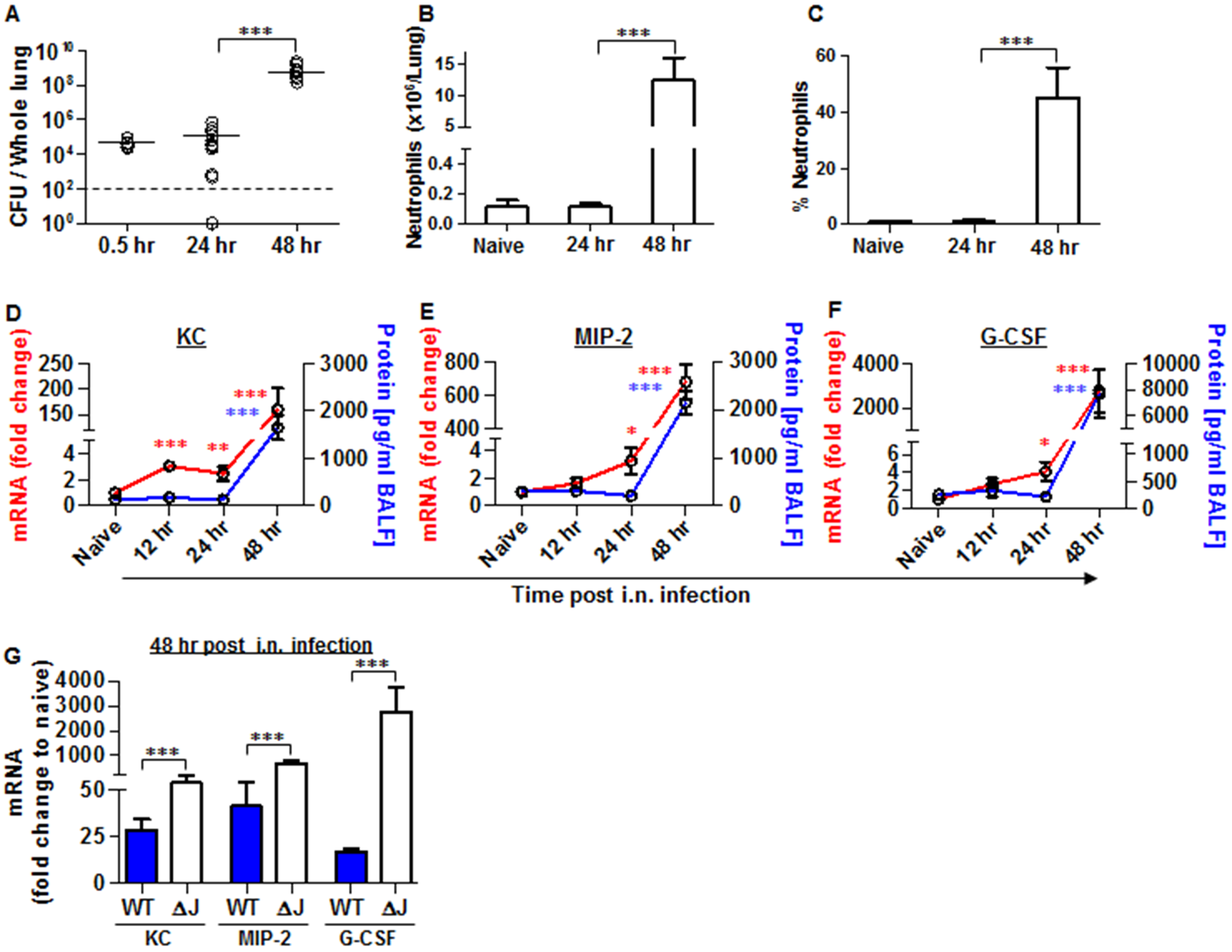 Neutrophils homing to lungs and bacterial propagation following airway infection of mice with the YopJ-deleted strain (Kim53ΔYopJ).
