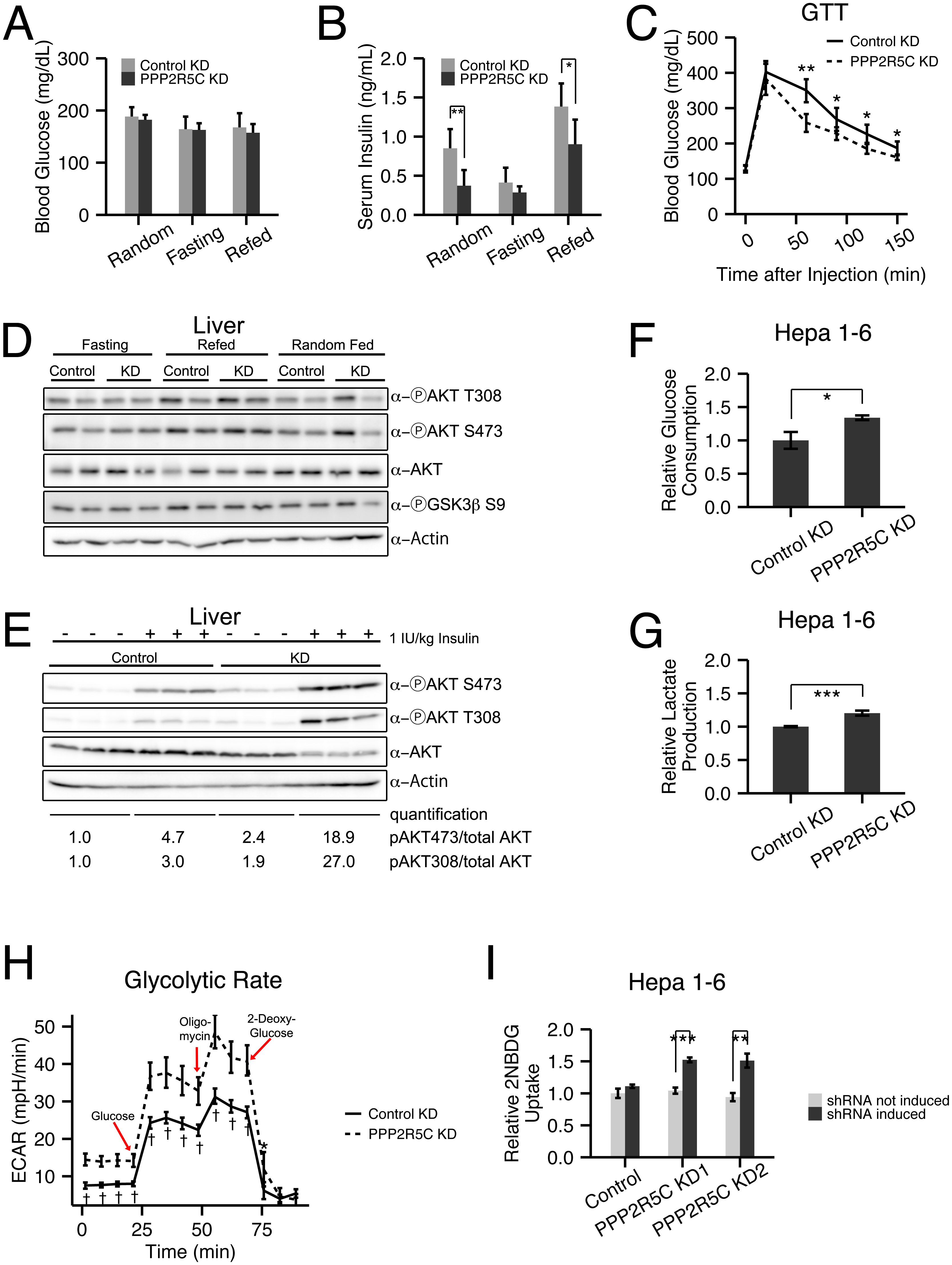 Hepatocyte-specific knockdown of PPP2R5C leads to increased glucose uptake and improved glucose tolerance.