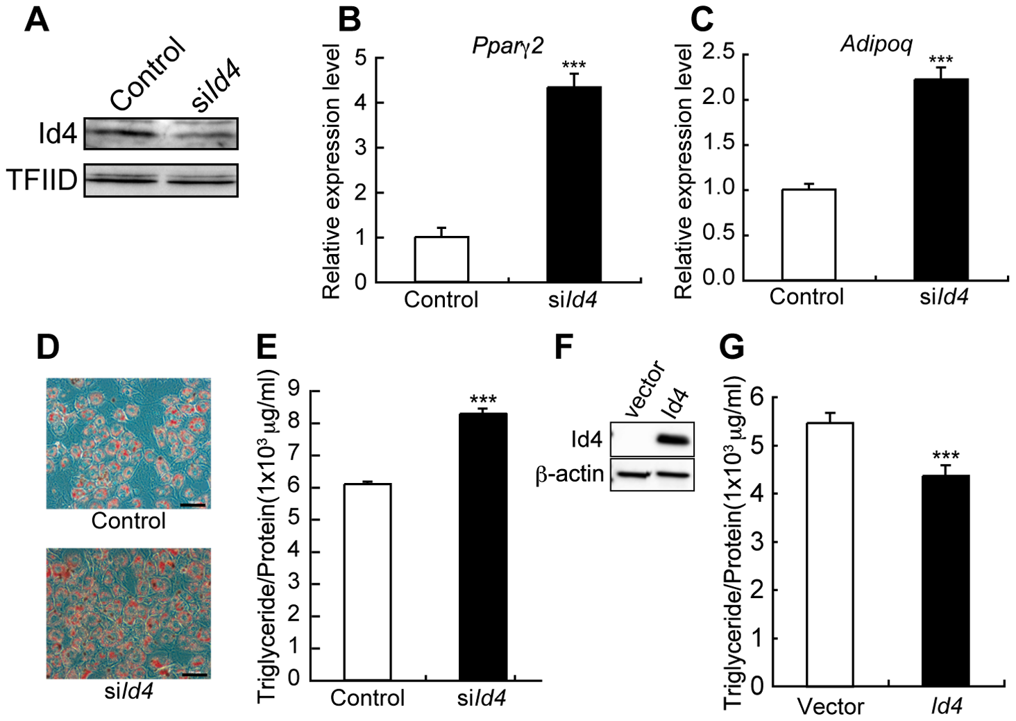 <i>Id4</i> weakly suppresses adipocyte differentiation in ST2 cells.