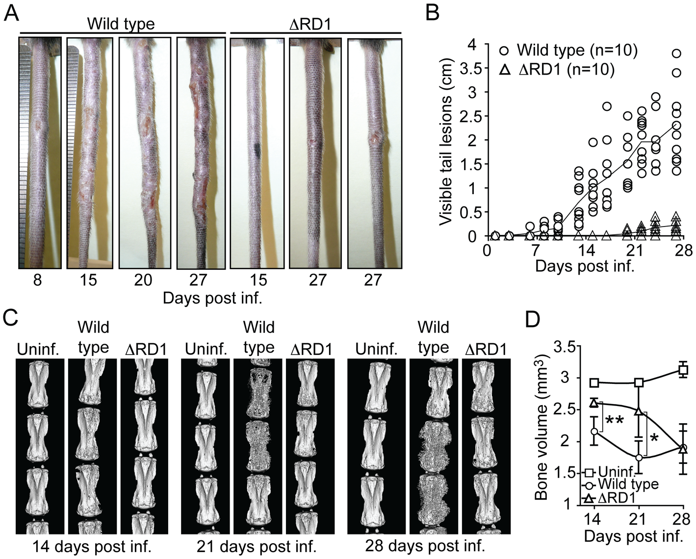 Disease and inflammation can be quantified and indicate a major role for Esx-1 in virulence.