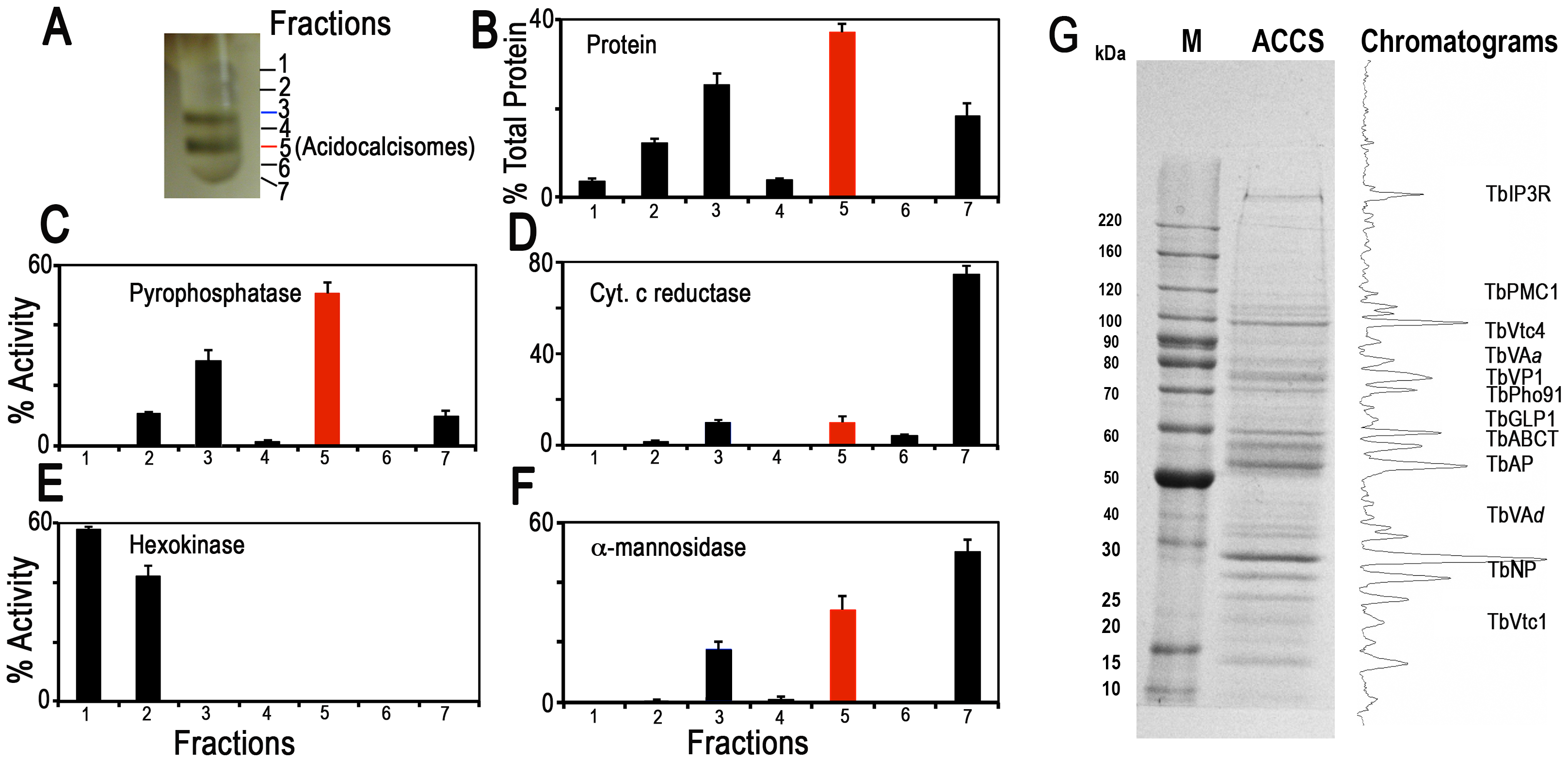 Distribution on iodixanol gradients of organellar markers from PCF trypanosomes.