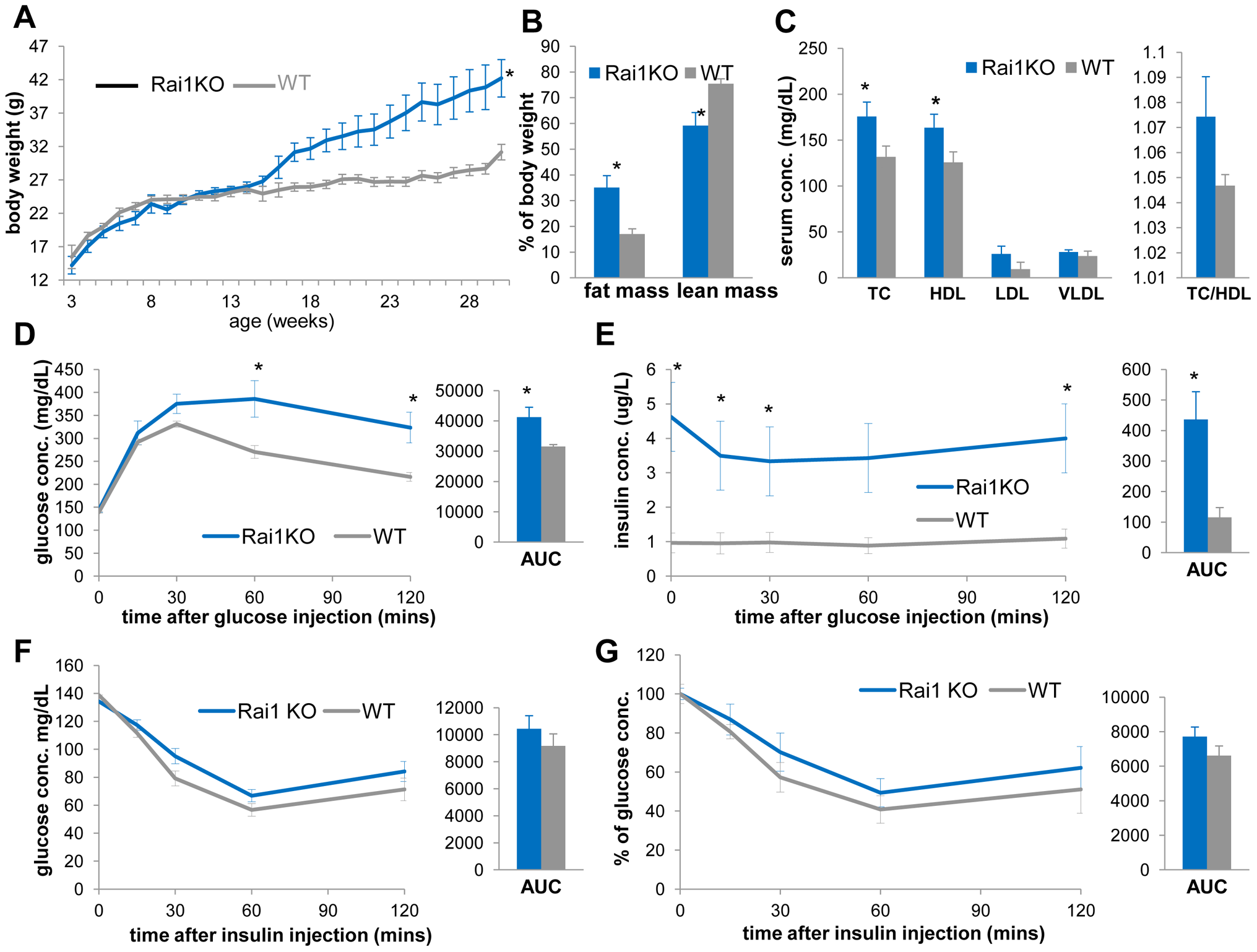 <i>Rai1<sup>+/−</sup></i> mice (blue) are obese, have increased TC, HDL, and display reduced insulin sensitivity compared to WT mice (gray).