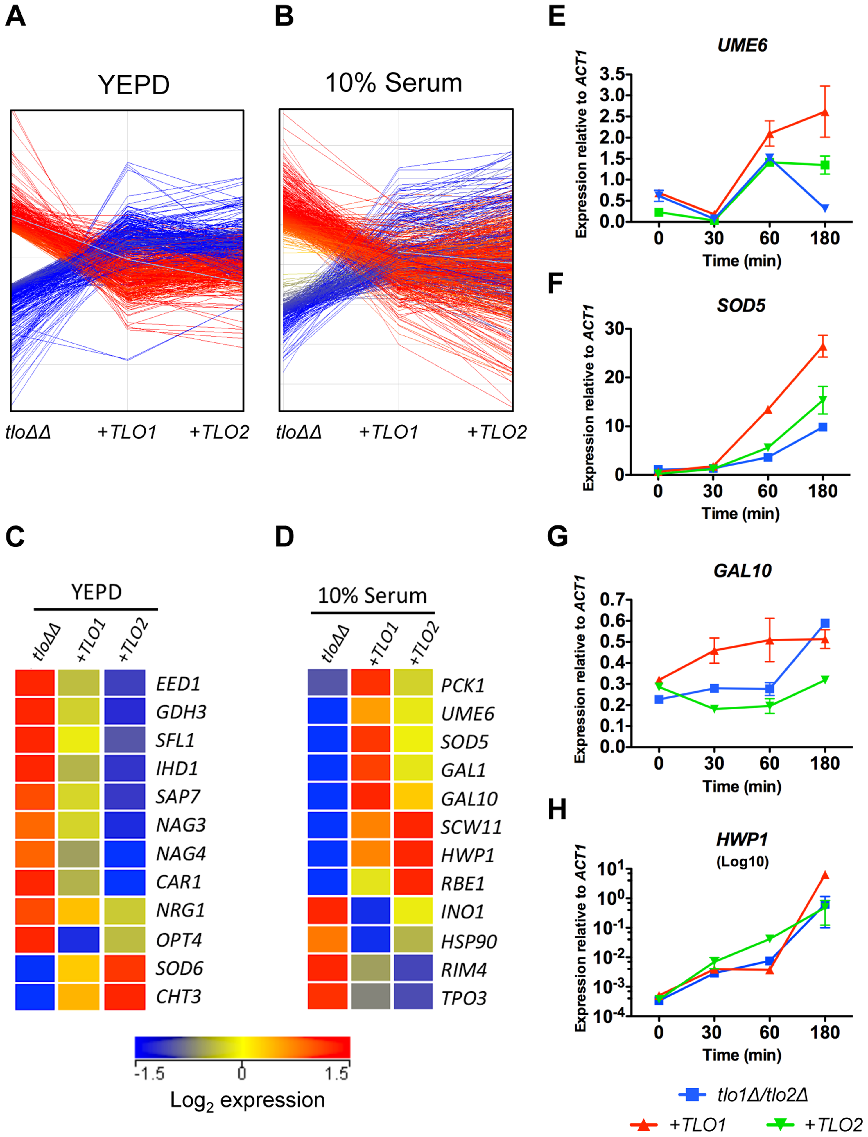 Reintroduction of <i>TLO1</i> or <i>TLO2</i> in the <i>tlo1</i>Δ/<i>tlo2</i>Δ (<i>tlo</i>ΔΔ) mutant restores wild-type levels of expression of overlapping and distinct sets of genes.