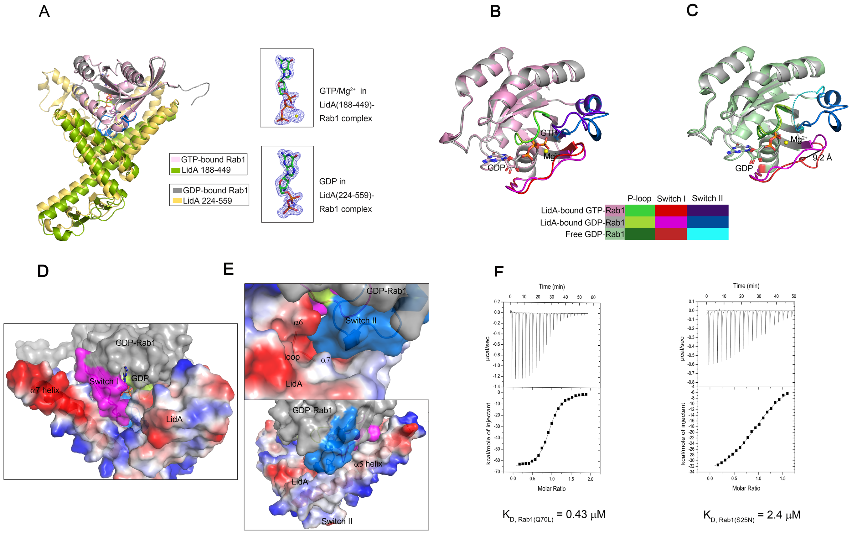 The complexed GDP-bound Rab1 (S25N) is held in the active conformation.