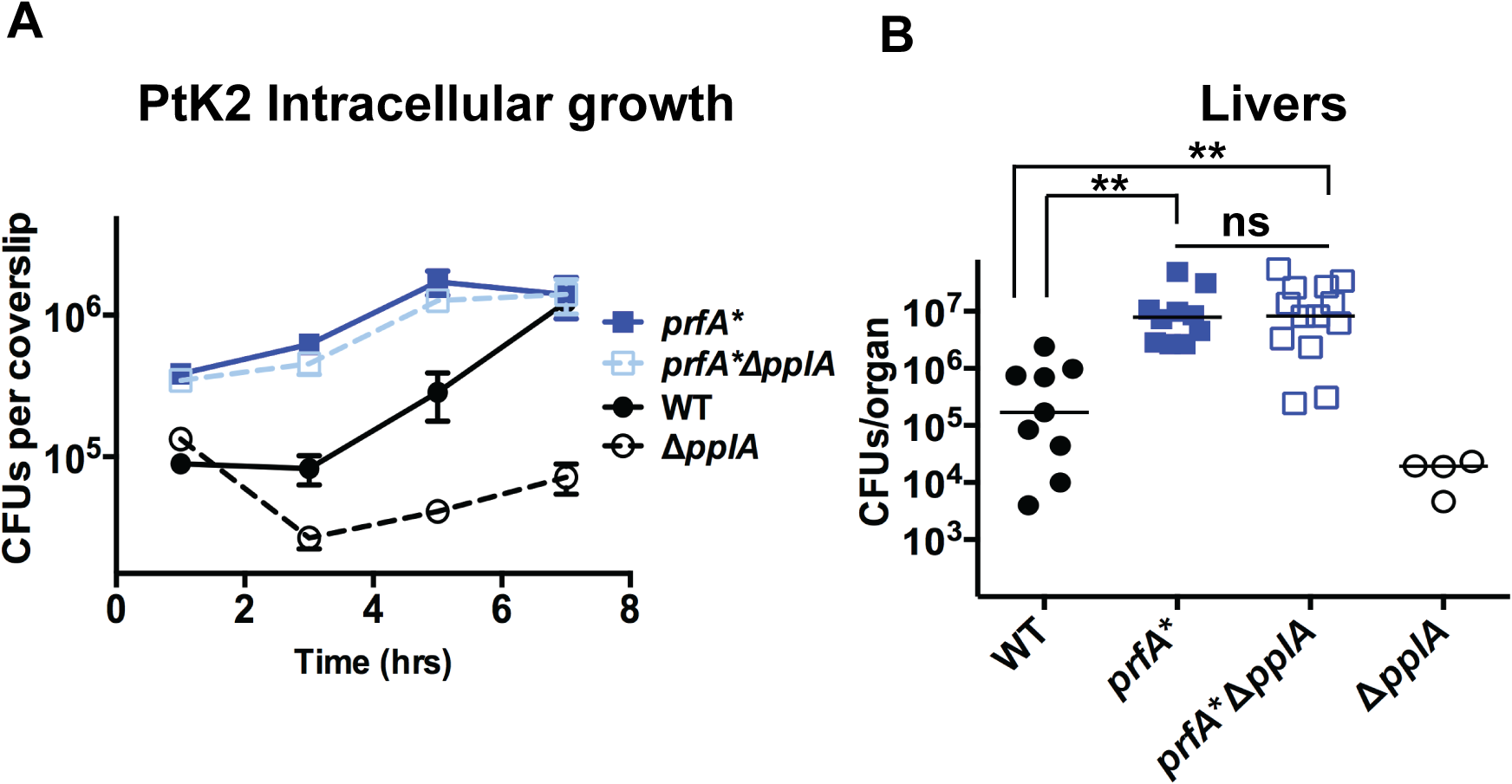 Constitutive activation of <i>prfA</i>* rescues virulence defects associated with loss of pPplA pheromone.