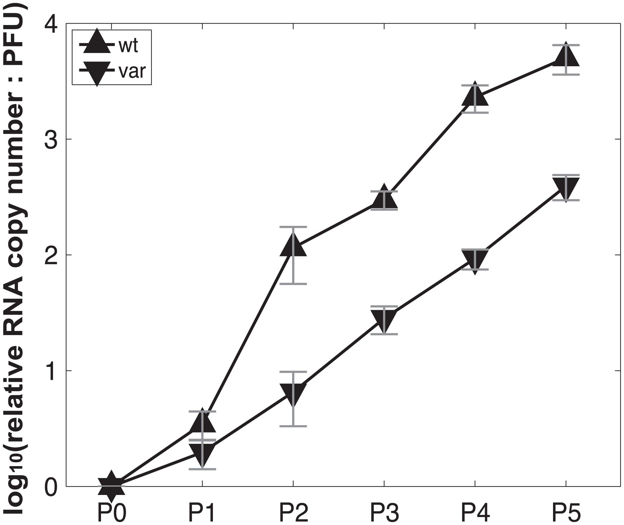 Production of virus stocks with high levels of DI particles: ratio of RNA copy number to PFU increases with serial passage at high MOI.