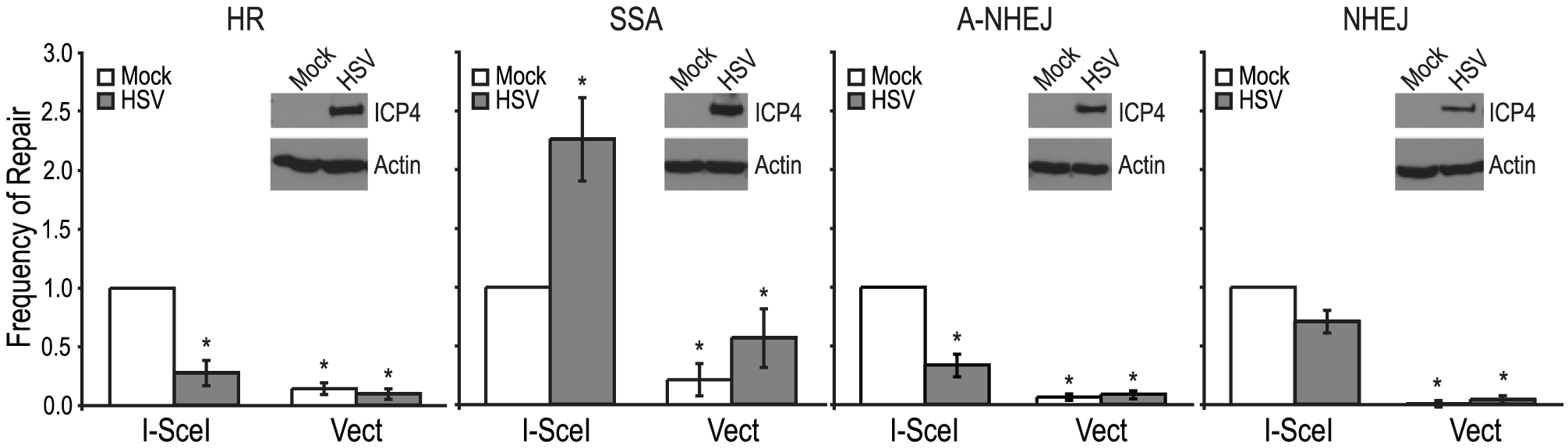 HSV infection increases SSA and inhibits HR, A-NHEJ and NHEJ.
