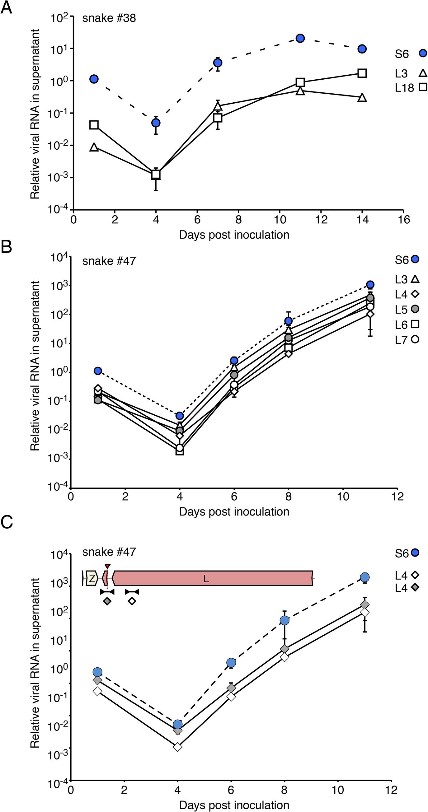 Virus populations replicate as stable ensembles in culture: (A) Liver homogenate from snake #38 was applied to cultures of JK cells and replication was monitored by measuring supernatant viral RNA levels using qRT-PCR and genotype-specific primers.