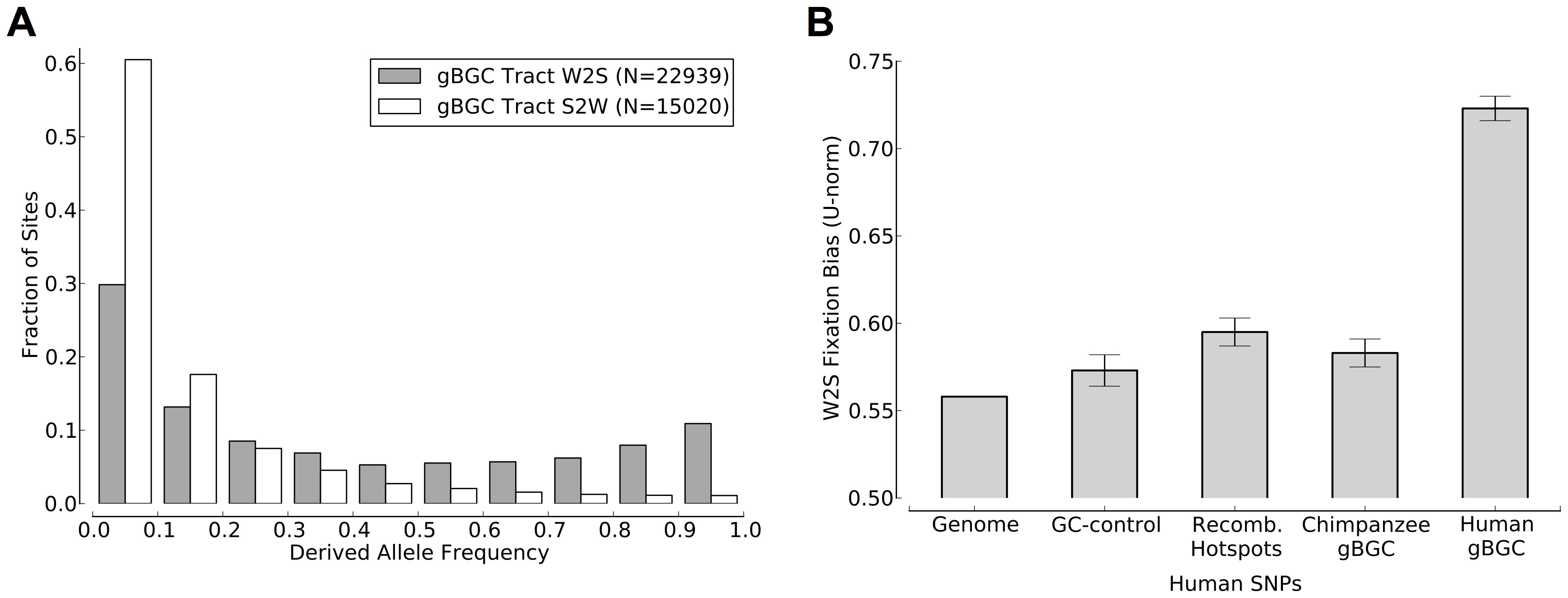 Human polymorphism data indicates an ongoing preference for the fixation of G and C alleles in the predicted gBGC tracts.
