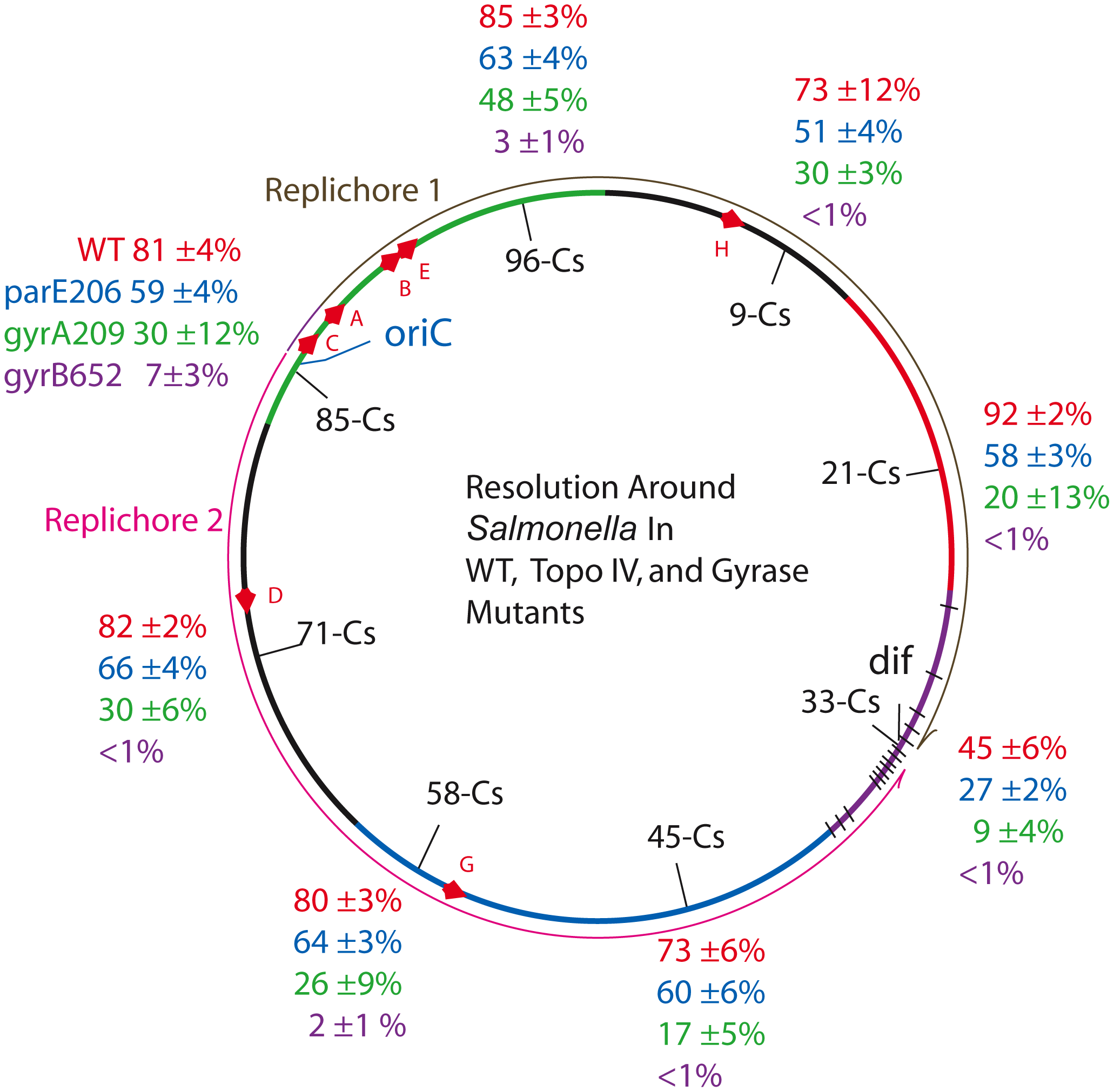 Resolution efficiencies in the <i>Salmonella</i> chromosome decline in strains carrying TS mutations in gyrase and Topo IV, even when cells are grown at permissive temperature (30°).