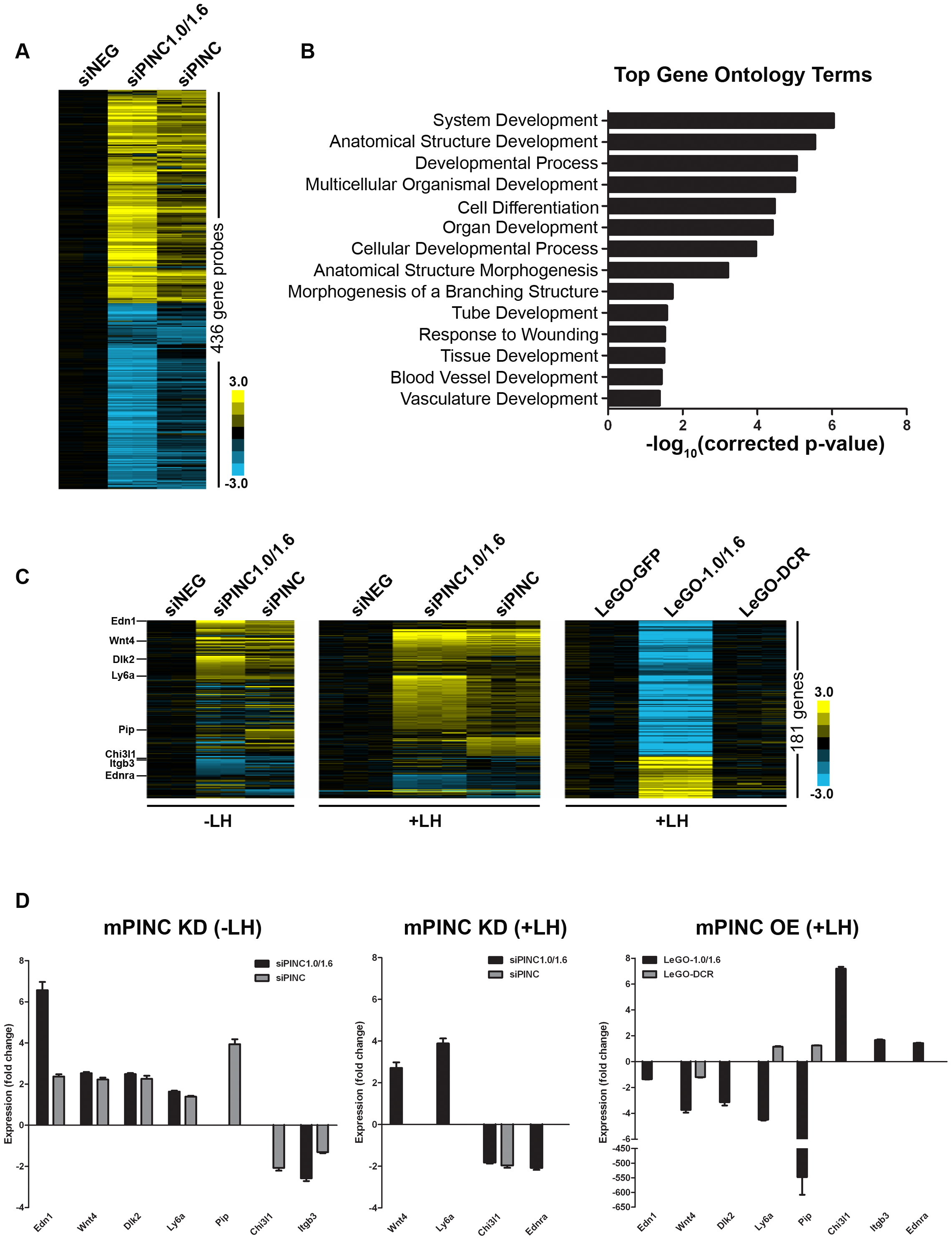 Microarray identifies potential targets of <i>mPINC</i> in HC11 cells.
