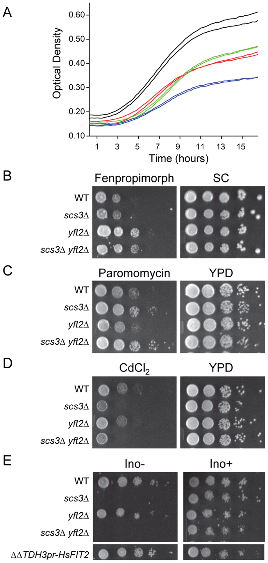 Characterization of <i>SCS3</i> and <i>YFT2</i> gene-deletion phenotypes.