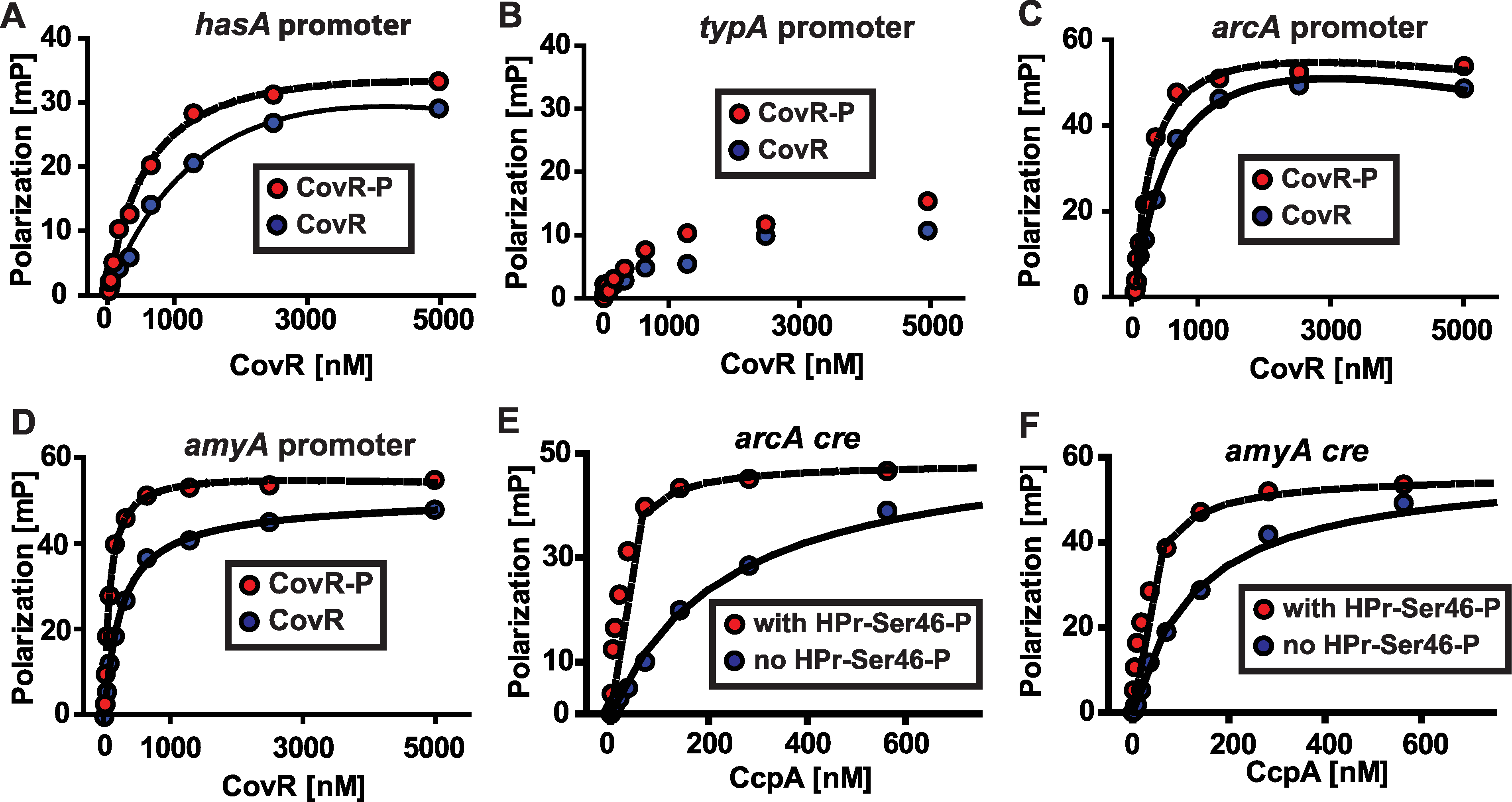 Recombinant CovR and CcpA bind to DNA from promoter regions of the same genes.