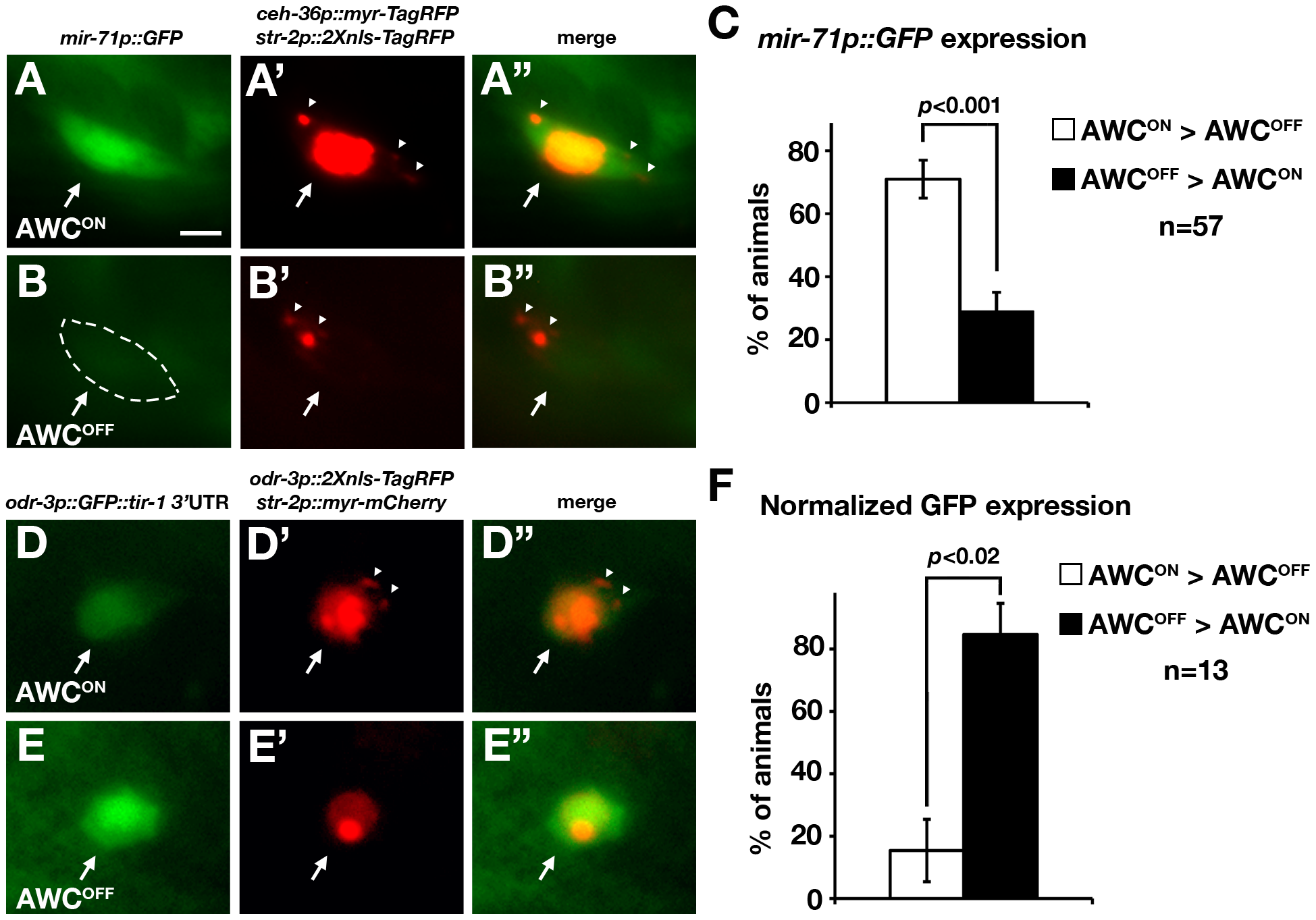 <i>mir-71</i> expression and the <i>tir-1</i> 3′ UTR are differentially regulated in AWC<sup>ON</sup> and AWC<sup>OFF</sup> neurons.