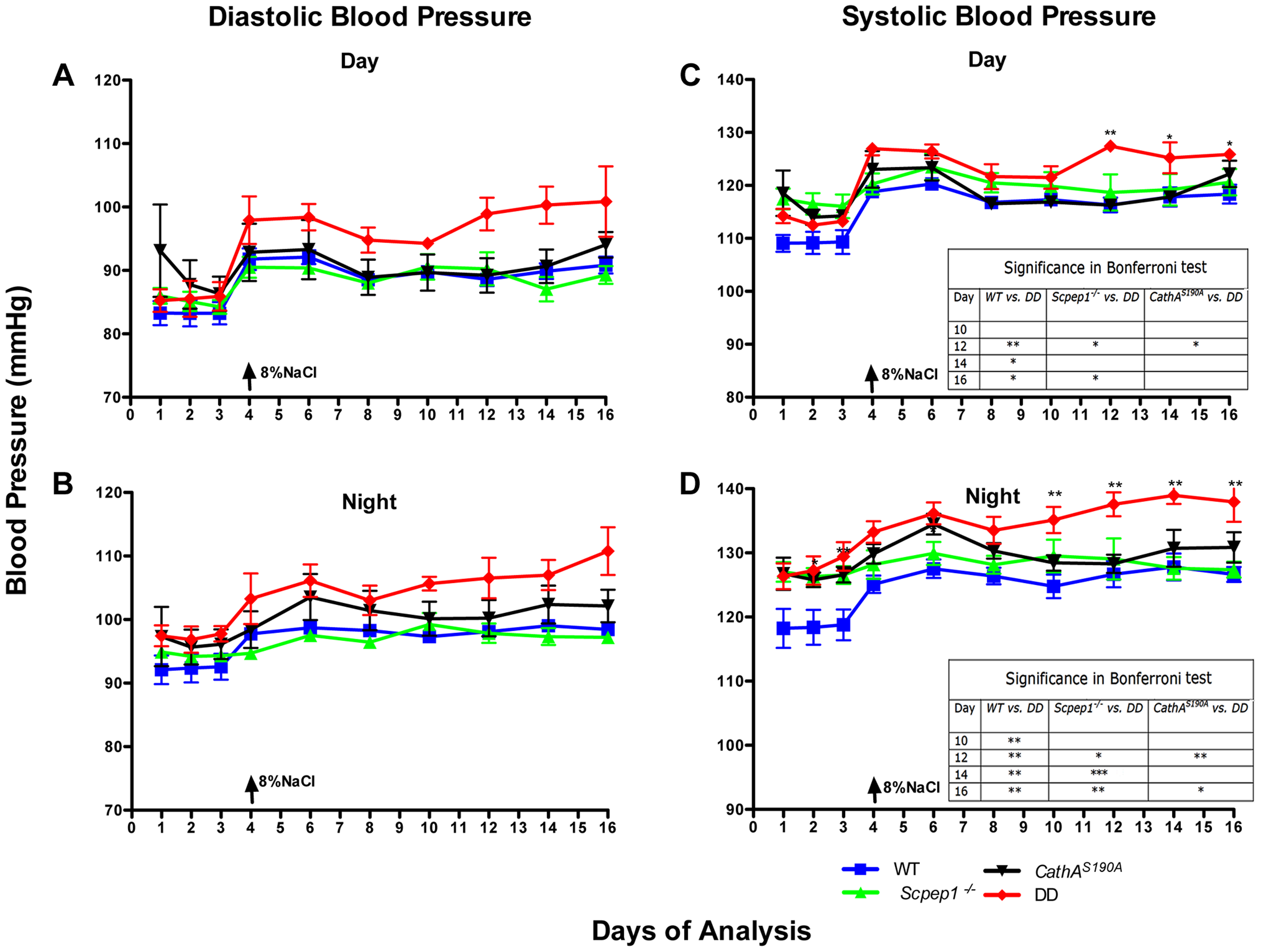 Mice with combined CathA/Scpep1 deficiency show significantly higher values of SBP.