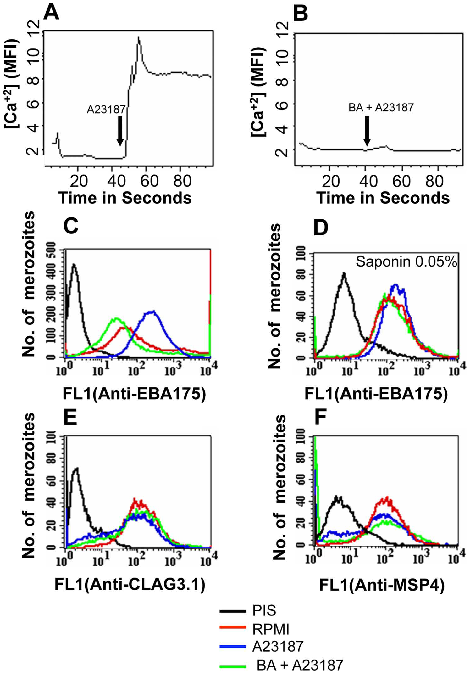 Cytosolic calcium levels and expression of EBA175 on merozoite surface detected by flow cytometry following treatment with calcium ionophore A23187.