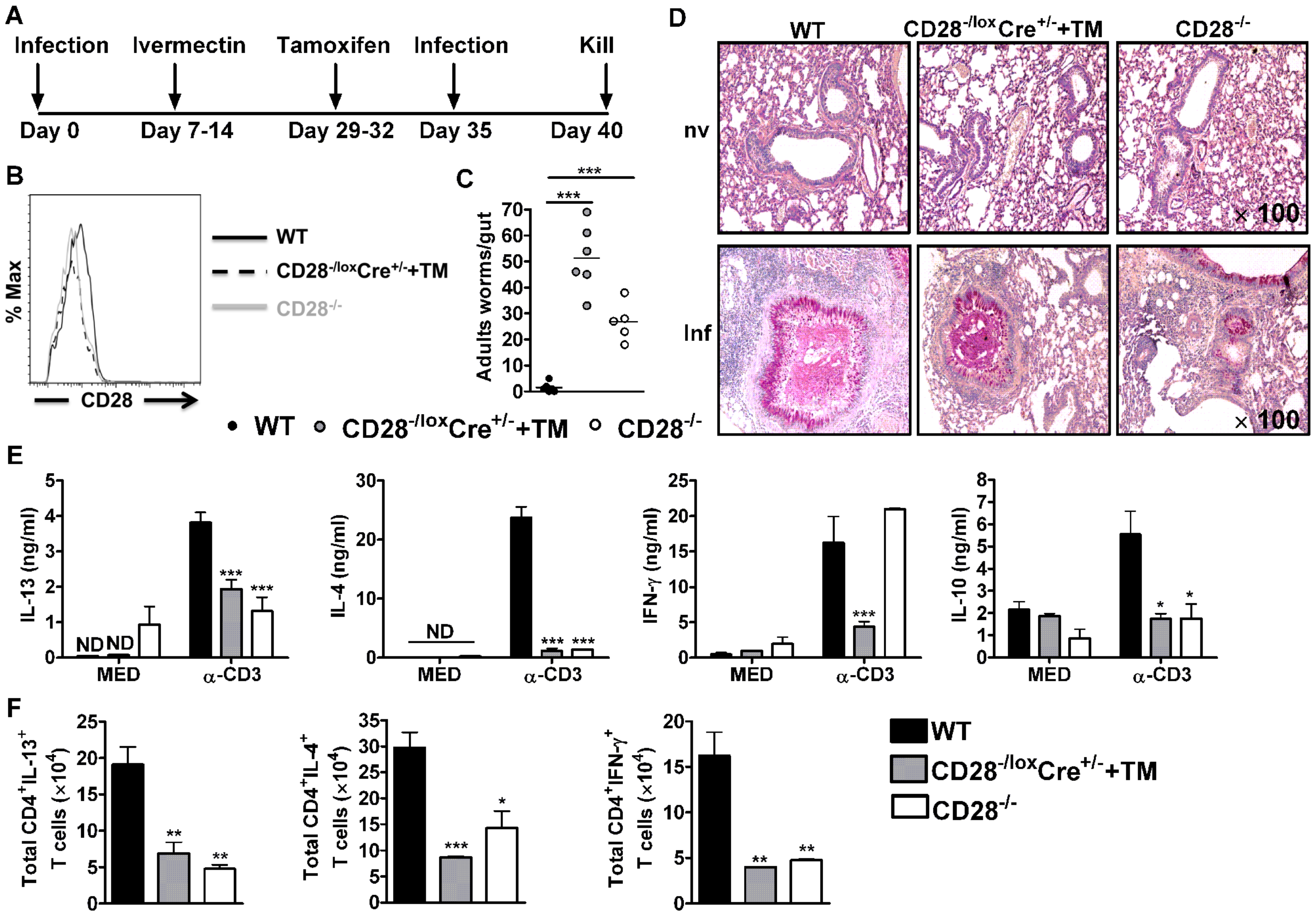 CD28 is required for development of protective recall responses to re-infection with <i>N. brasiliensis</i>.