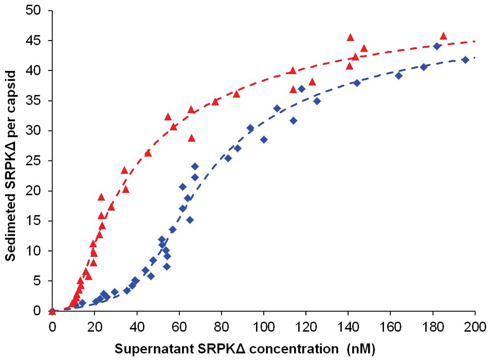 Titration of Cp183 capsid by SRPKΔ.