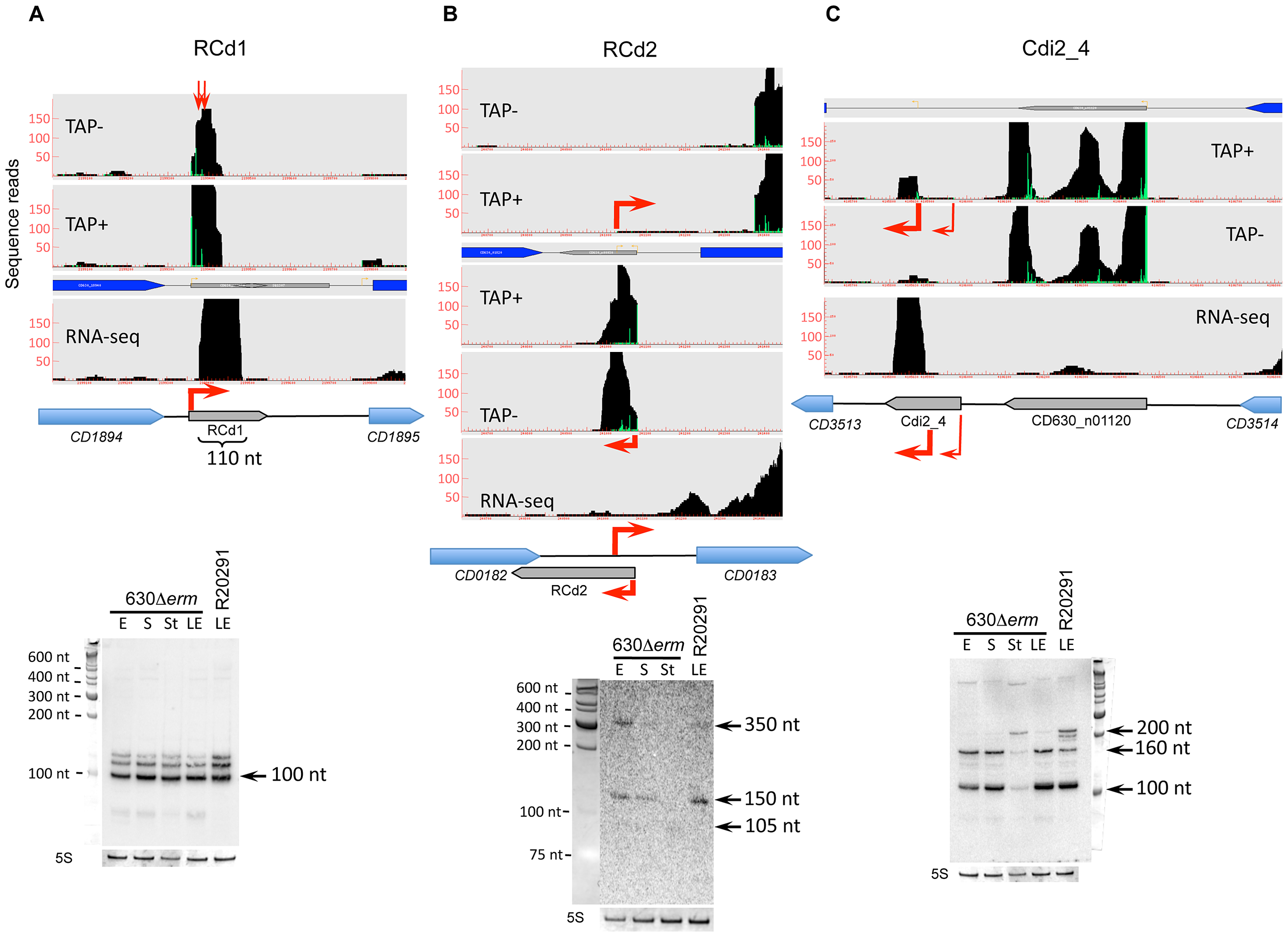 Detection of selected sRNAs by RNA–seq, 5′-end RNA–seq, and Northern blot.