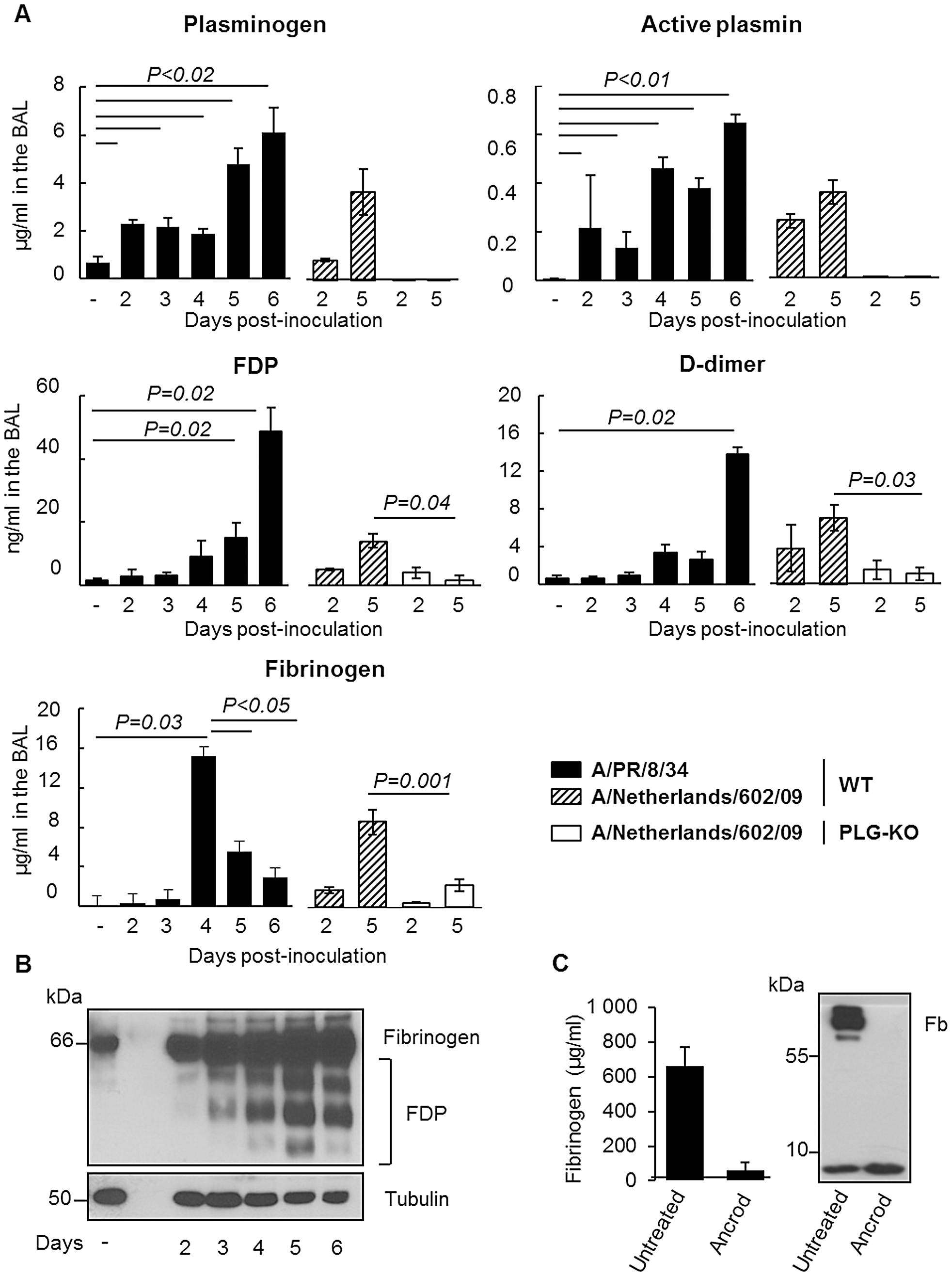Fibrinolysis is induced following severe influenza infections.