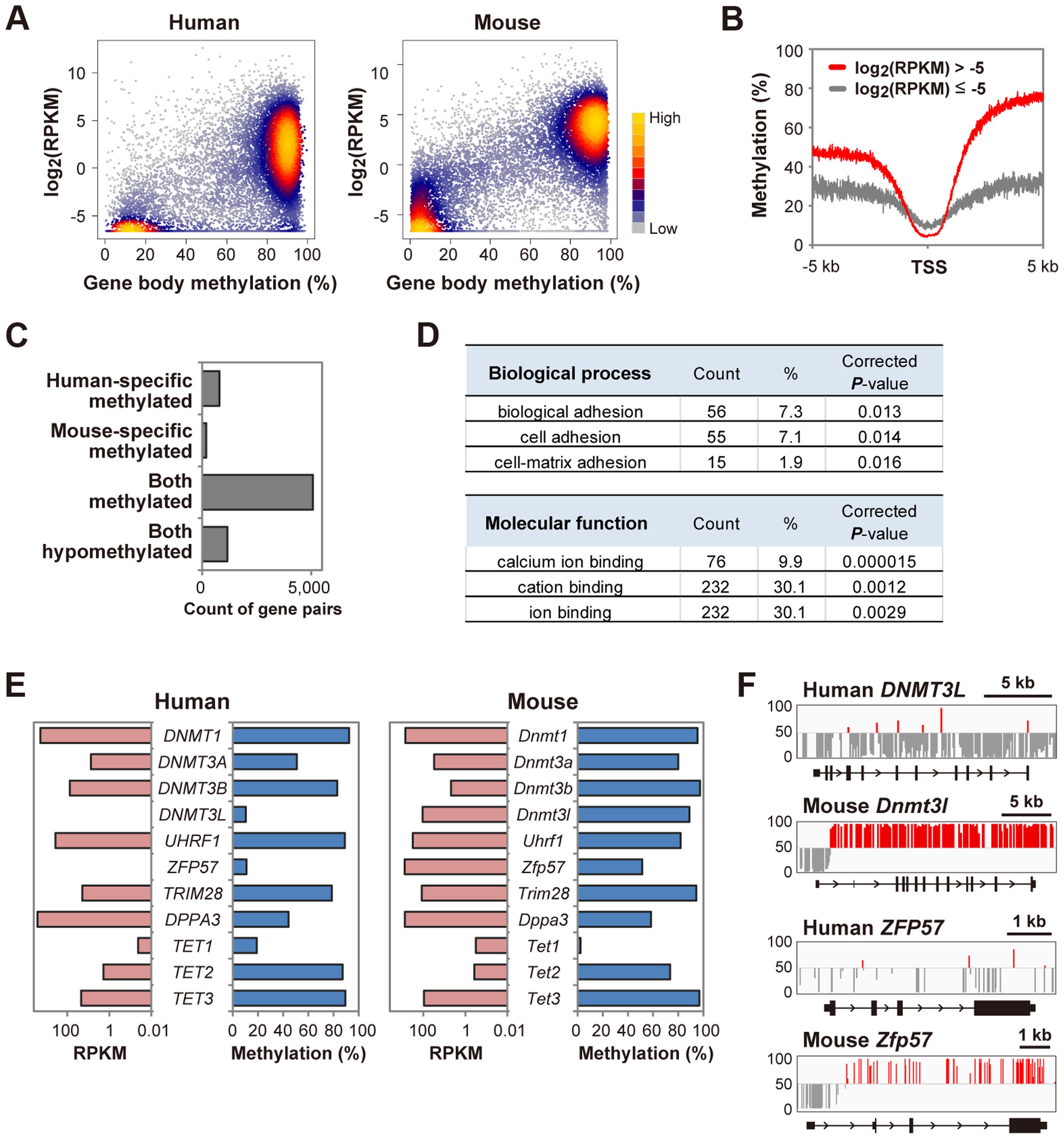 A bimodal gene body methylation pattern associated with transcription in human oocytes.