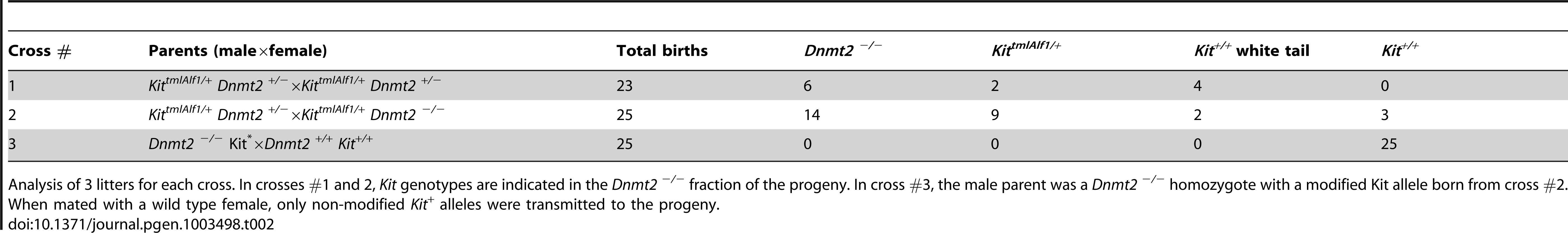 The epigenetic Kit modification is maintained in the <i>Dnmt2 <sup>−/−</sup></i> progeny of heterozygote parents but not further transmitted.