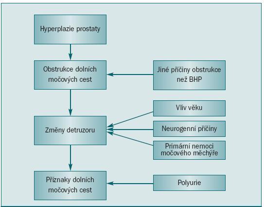 Patofyziologie BHP – komplexní interakce mezi uretrální obstrukcí, funkcí detruzoru a produkcí moči [3].