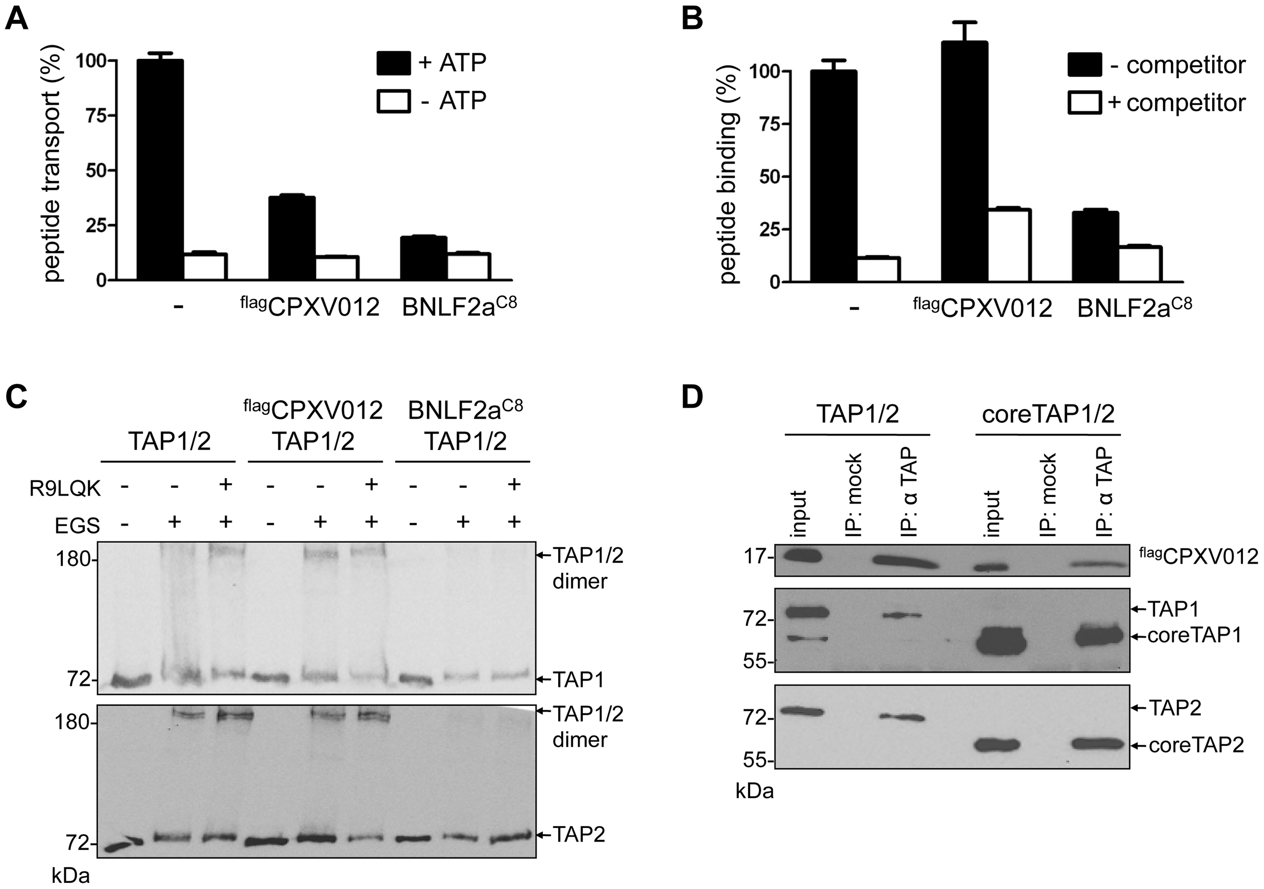 CPXV012 inhibits peptide transport but not peptide binding to TAP.