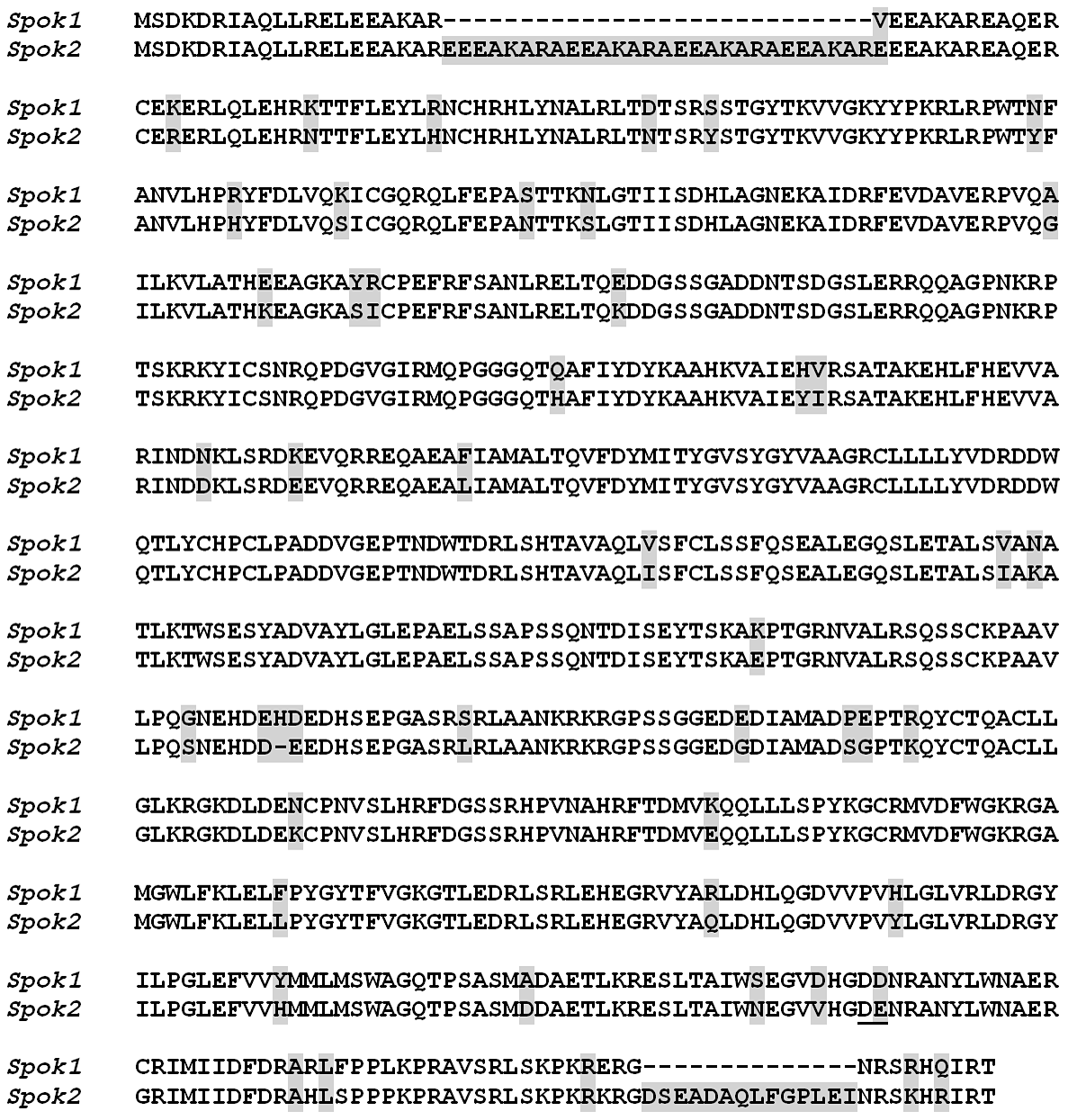 Comparison of Spok1 and Spok2 protein sequences.