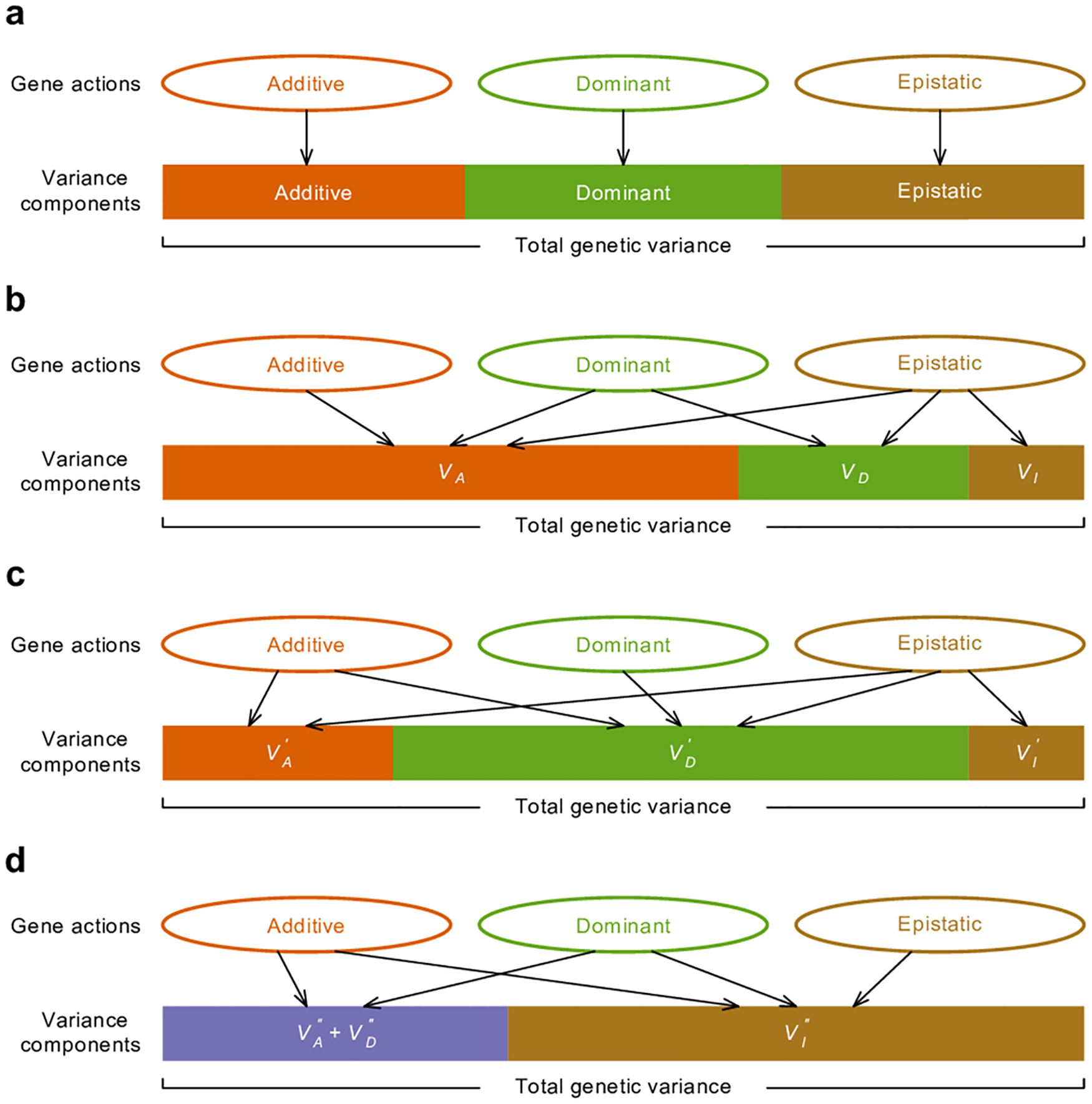 Relationship between gene actions and variance components.