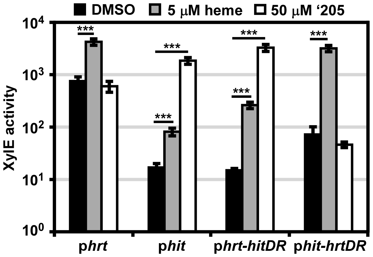 The direct repeat in each promoter determines specificity <i>in vivo</i>.