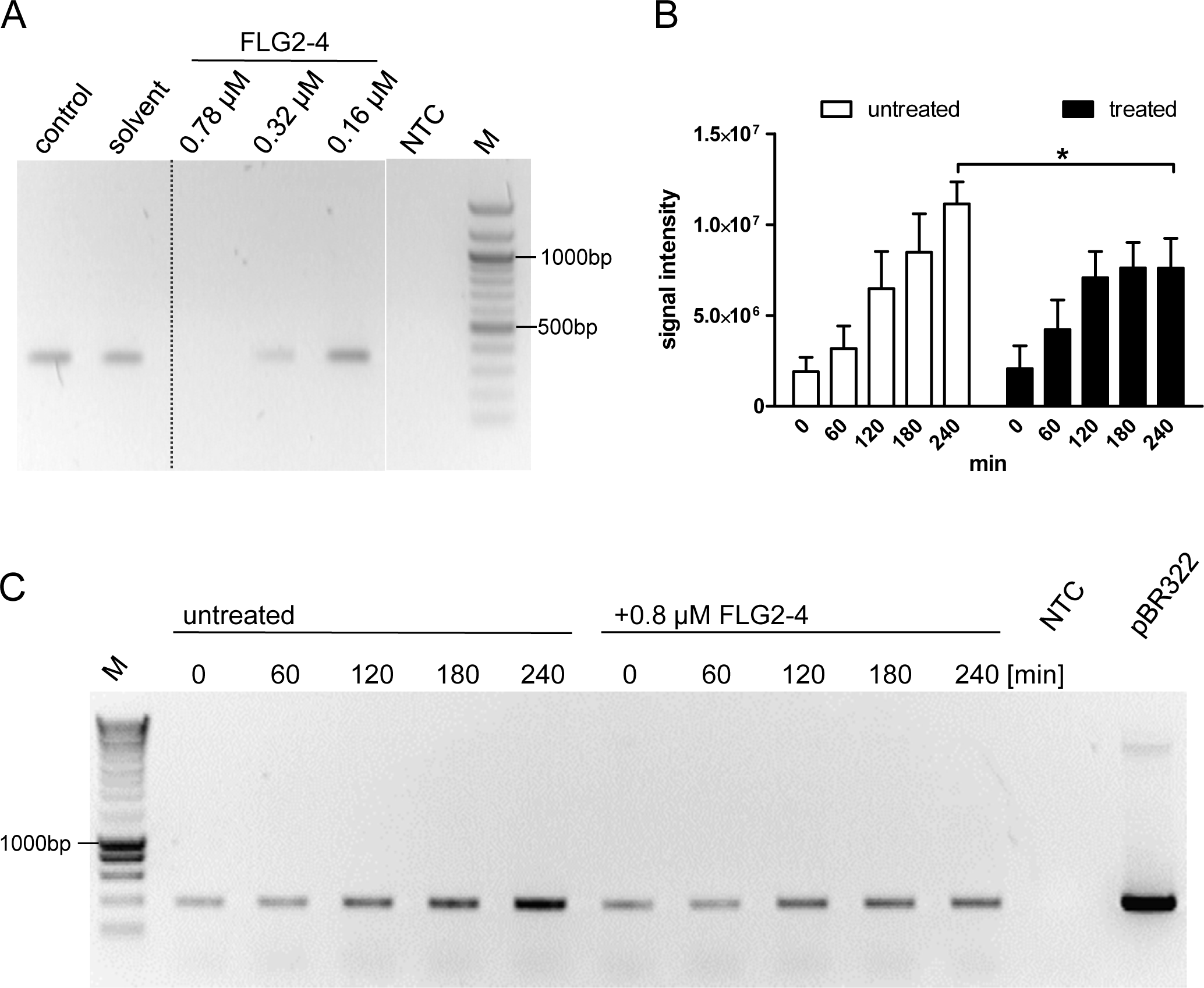 FLG2-4 is able to inhibit bacterial replication.