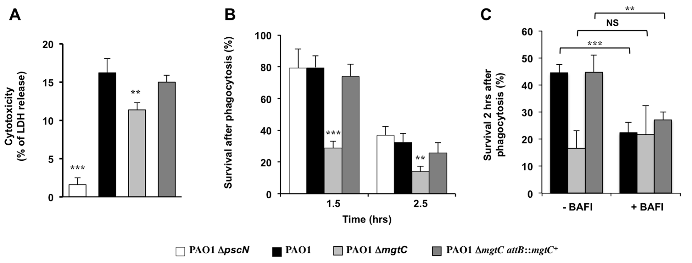 Behaviour of <i>mgtC</i> mutant towards J774 macrophages.
