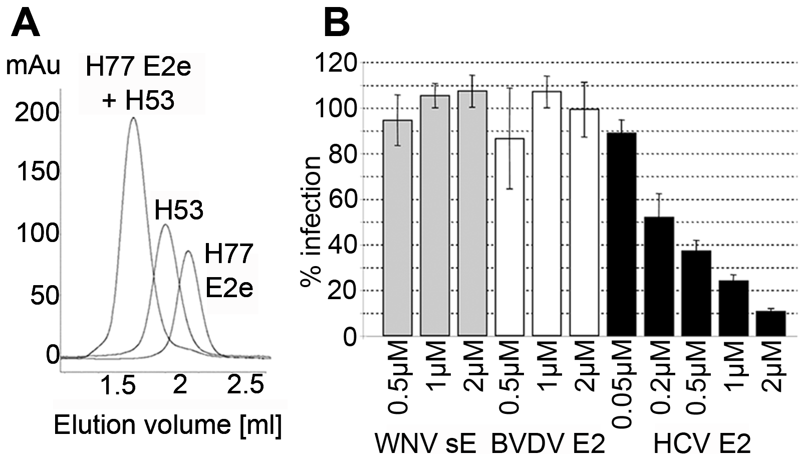 Functional and conformational characterization of HCV E2e.