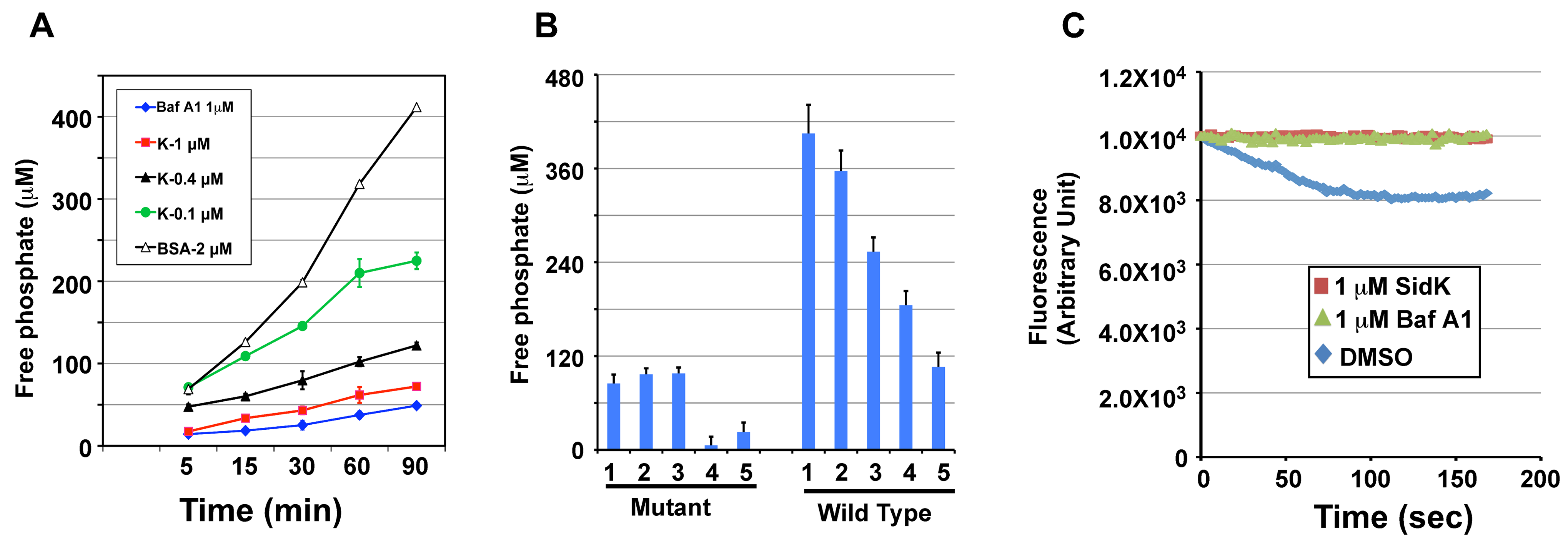 SidK inhibits v-ATPase-mediated ATP hydrolysis and proton translocation.