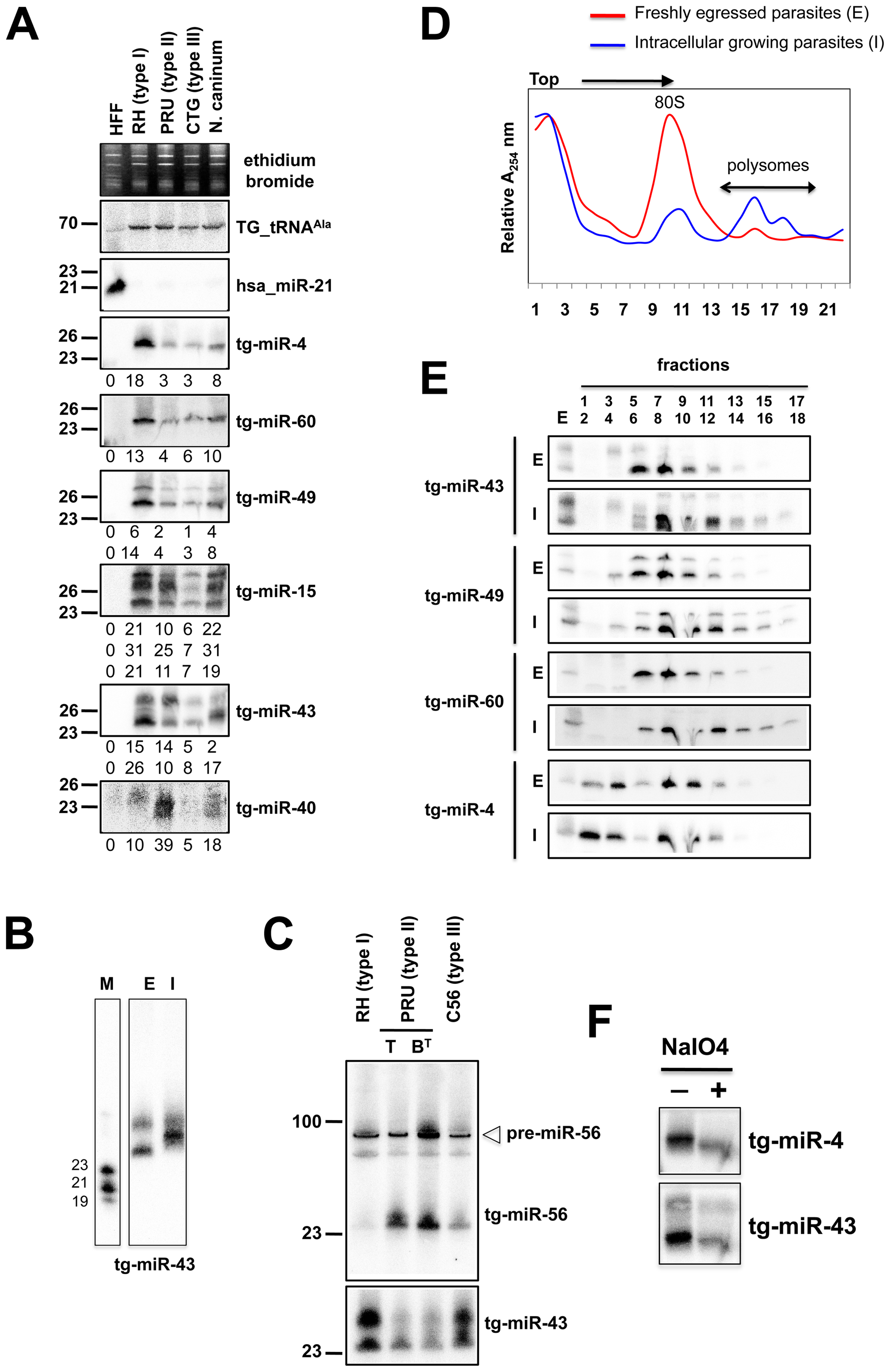 Expression patterns and characteristics of representative microRNAs in <i>Toxoplasma.</i>
